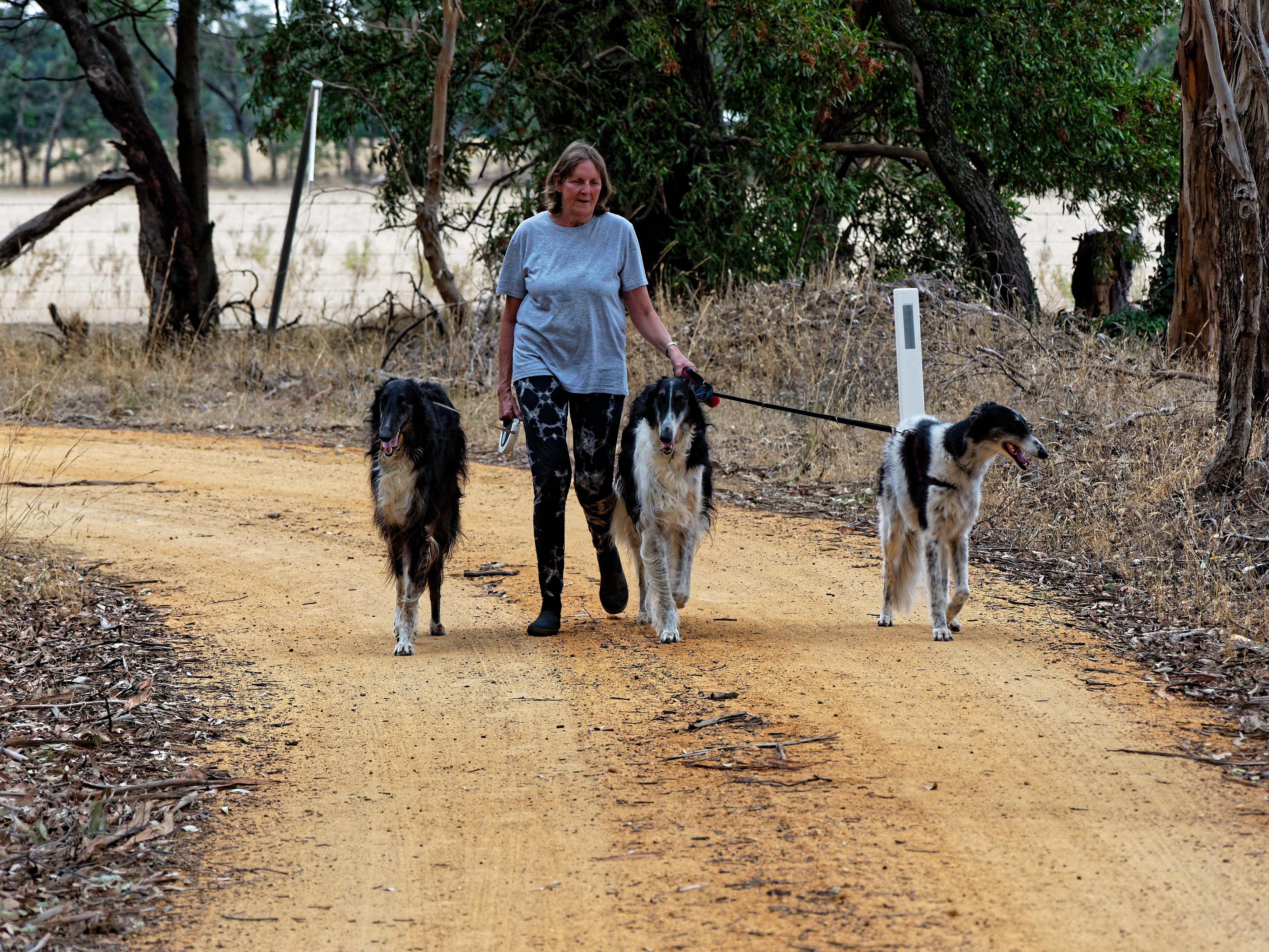 Walking-dogs-36.jpeg
