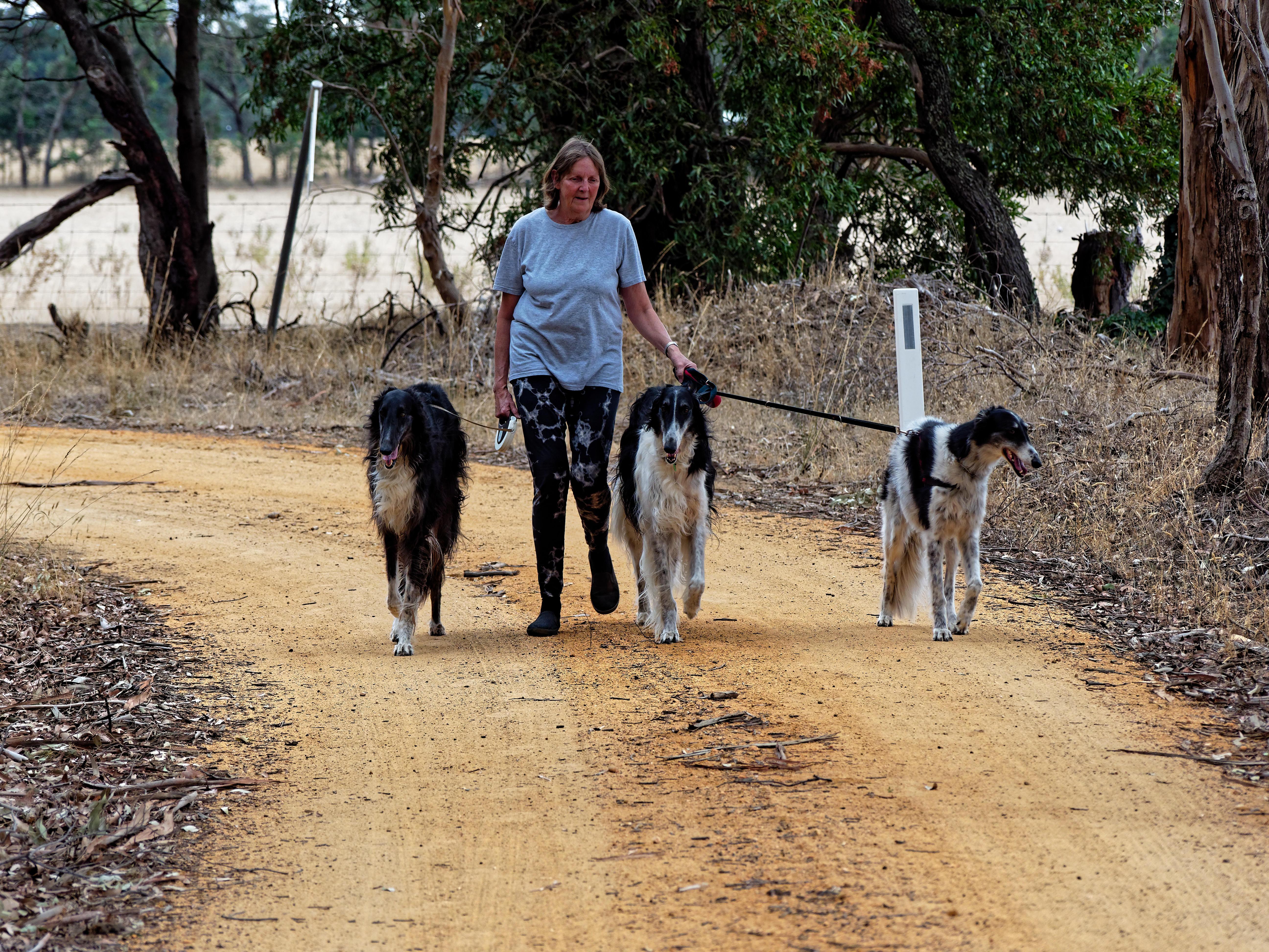 Walking-dogs-39.jpeg