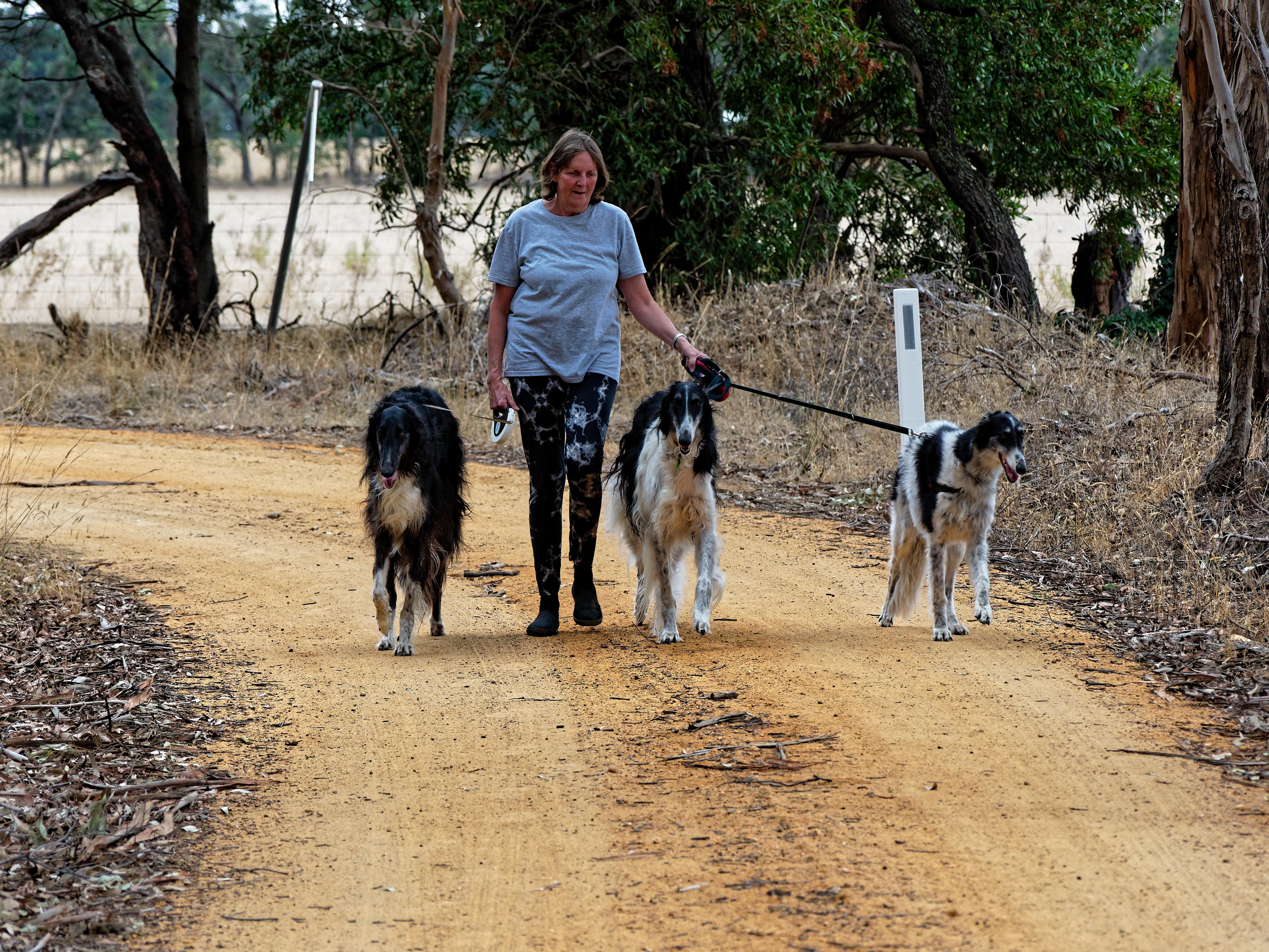 Walking-dogs-45.jpeg