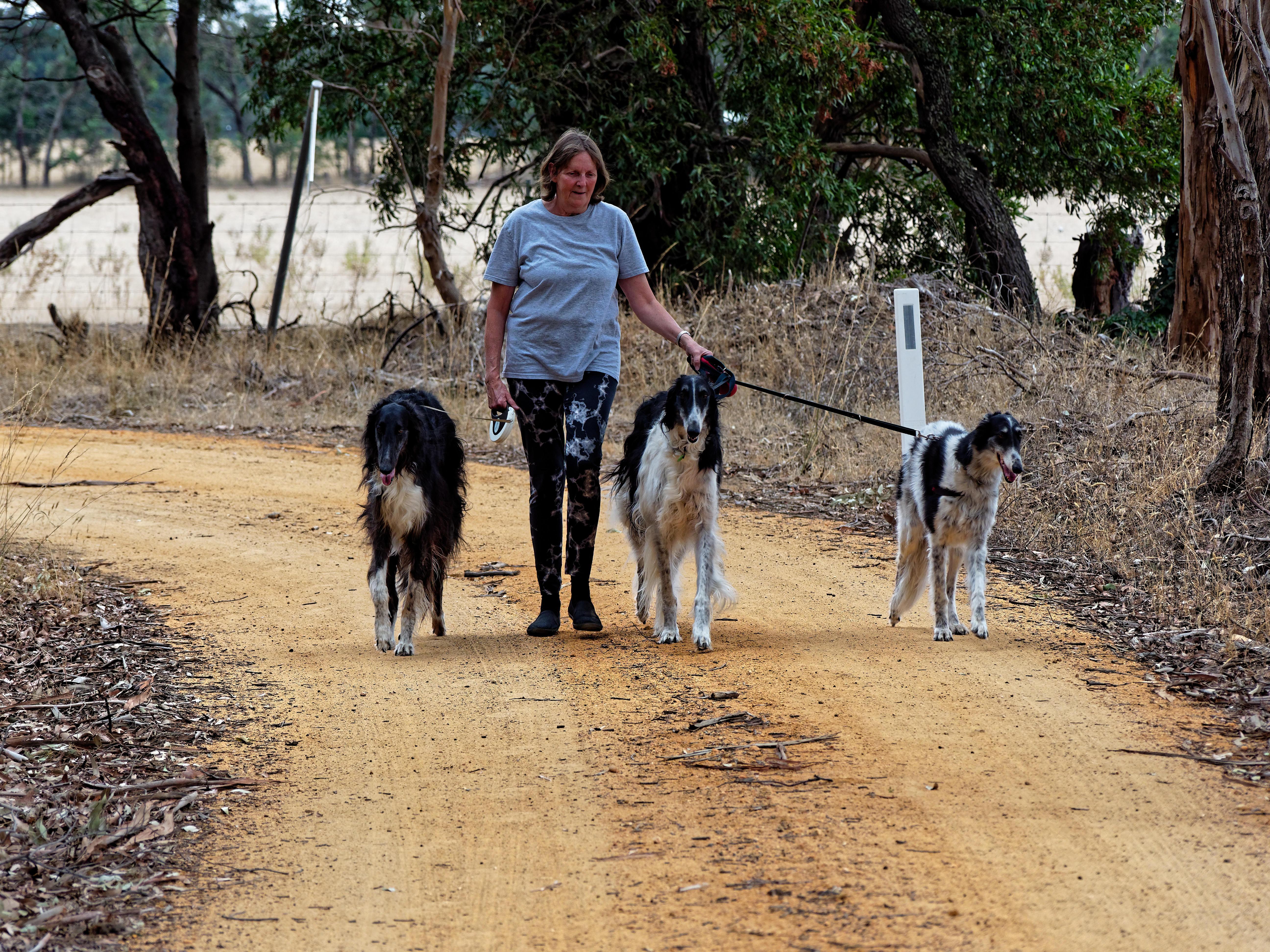 Walking-dogs-48.jpeg