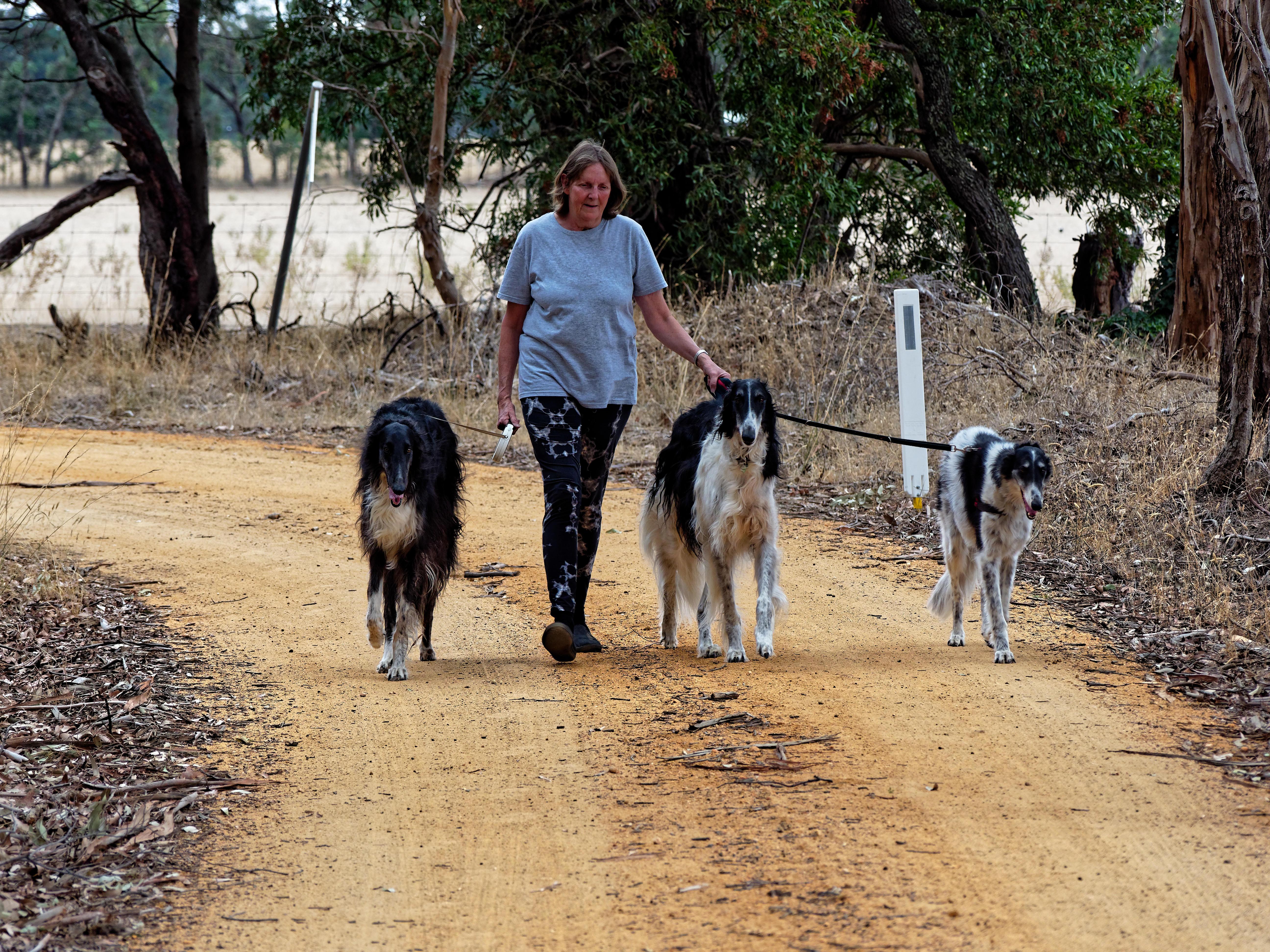 Walking-dogs-49.jpeg