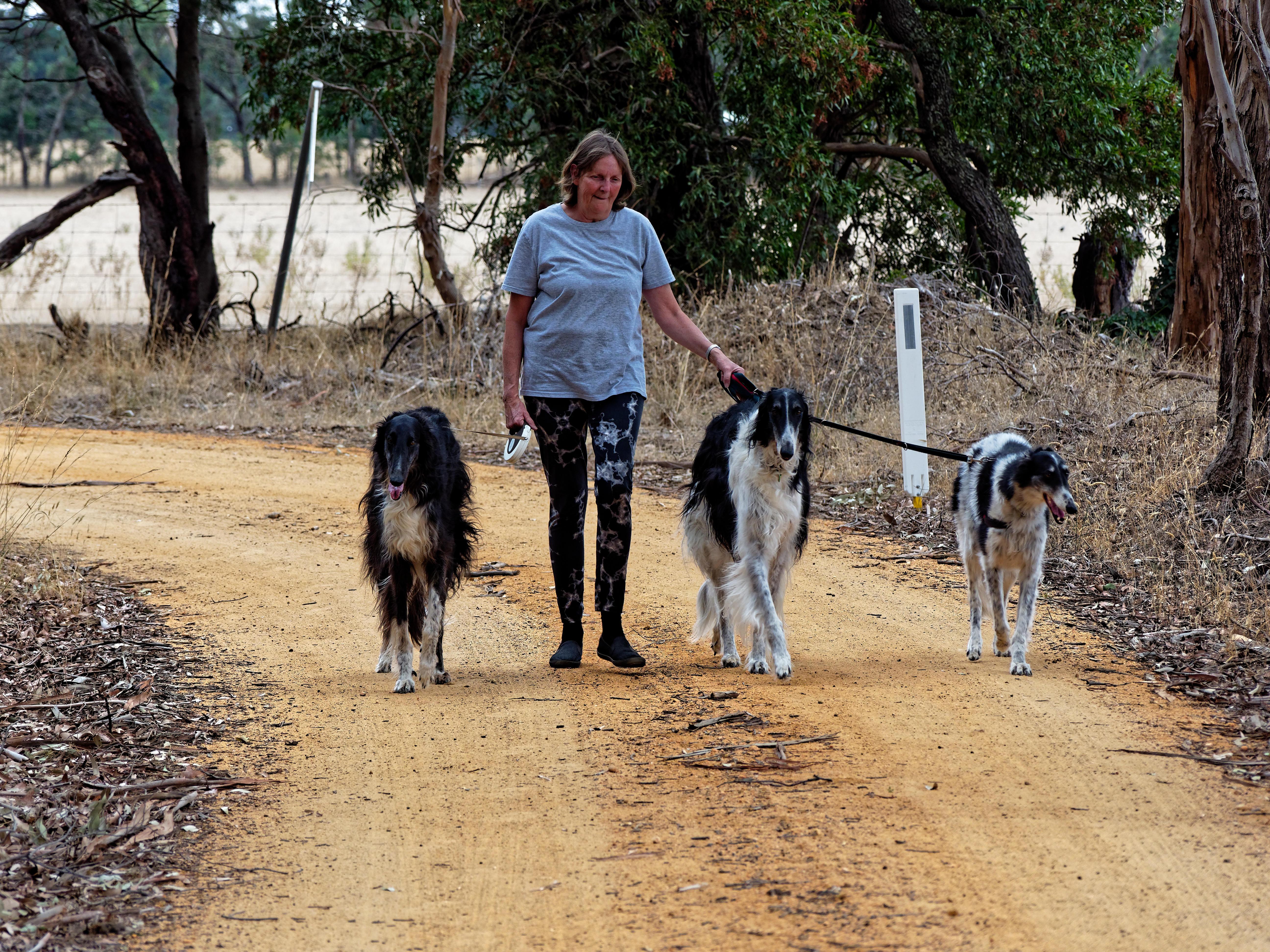 Walking-dogs-50.jpeg