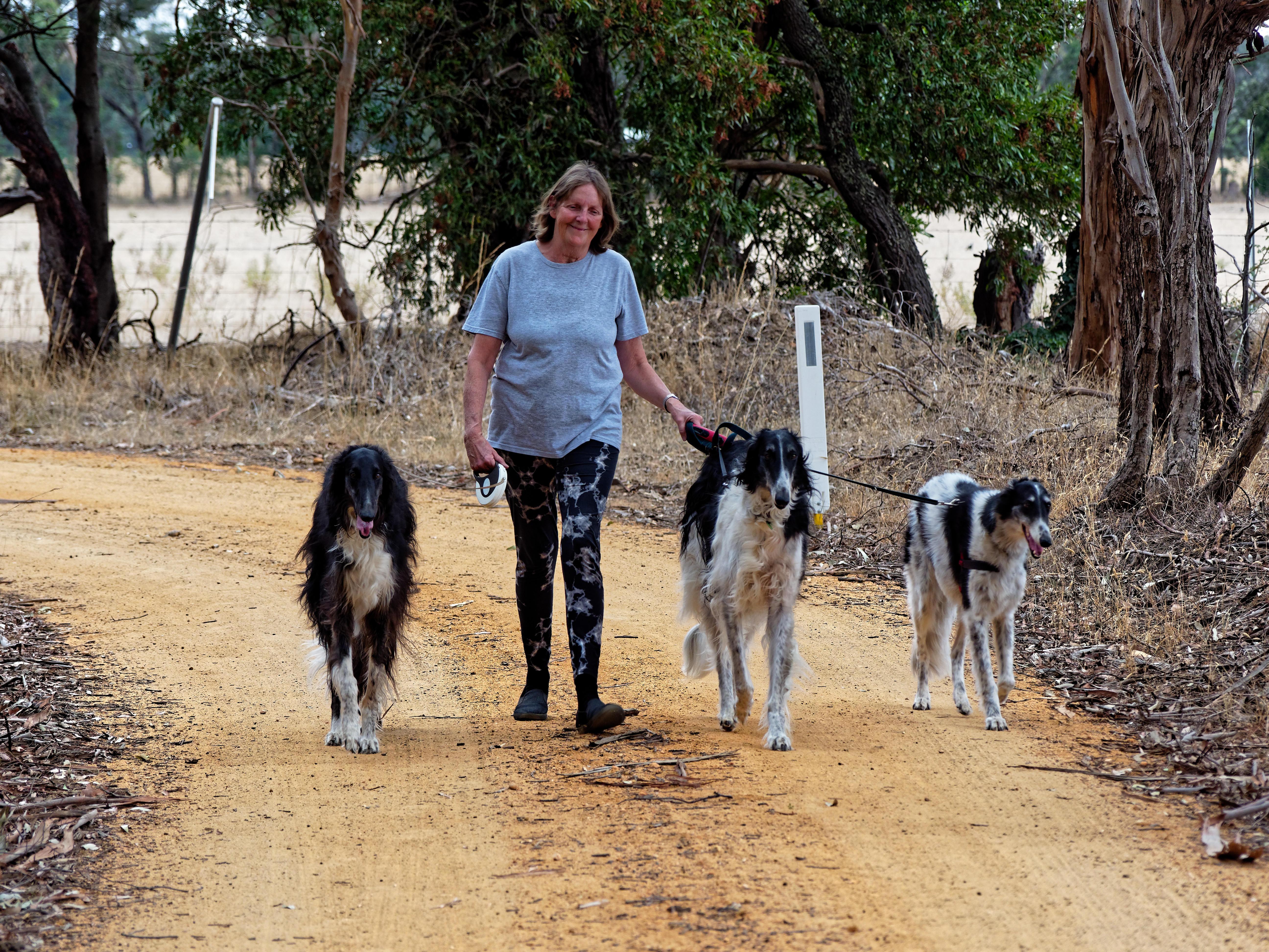 Walking-dogs-54.jpeg