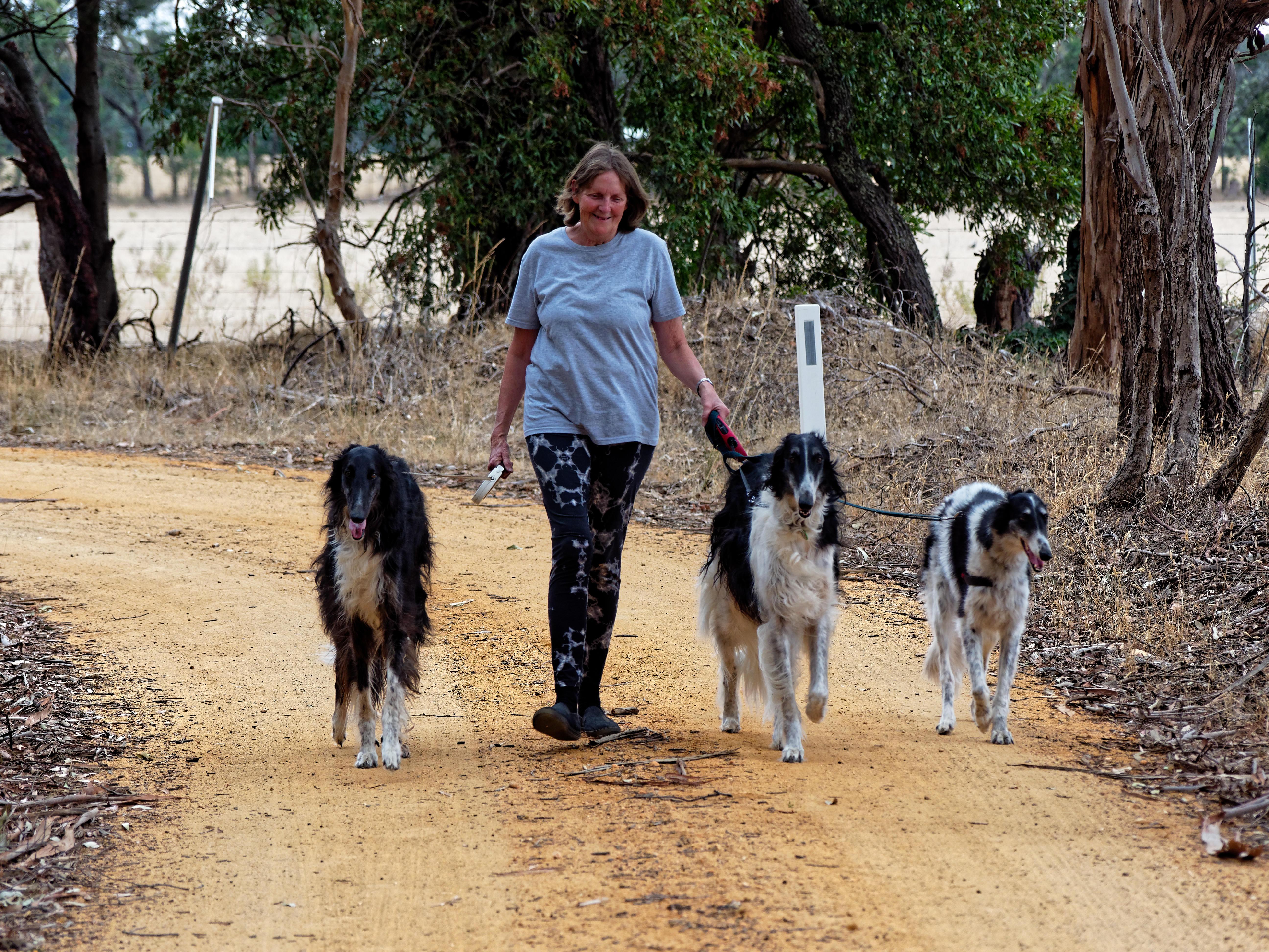 Walking-dogs-60.jpeg