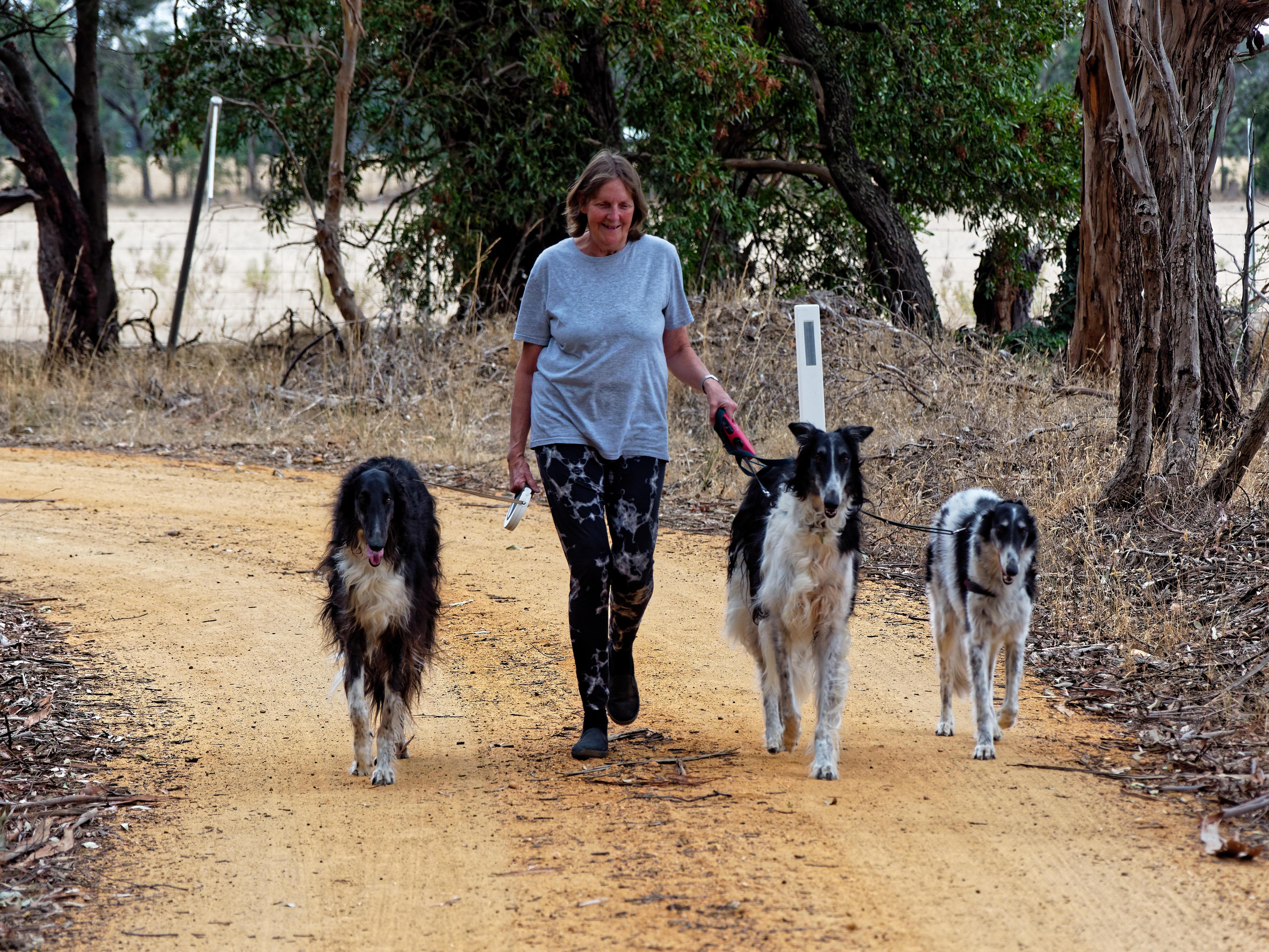 Walking-dogs-63.jpeg