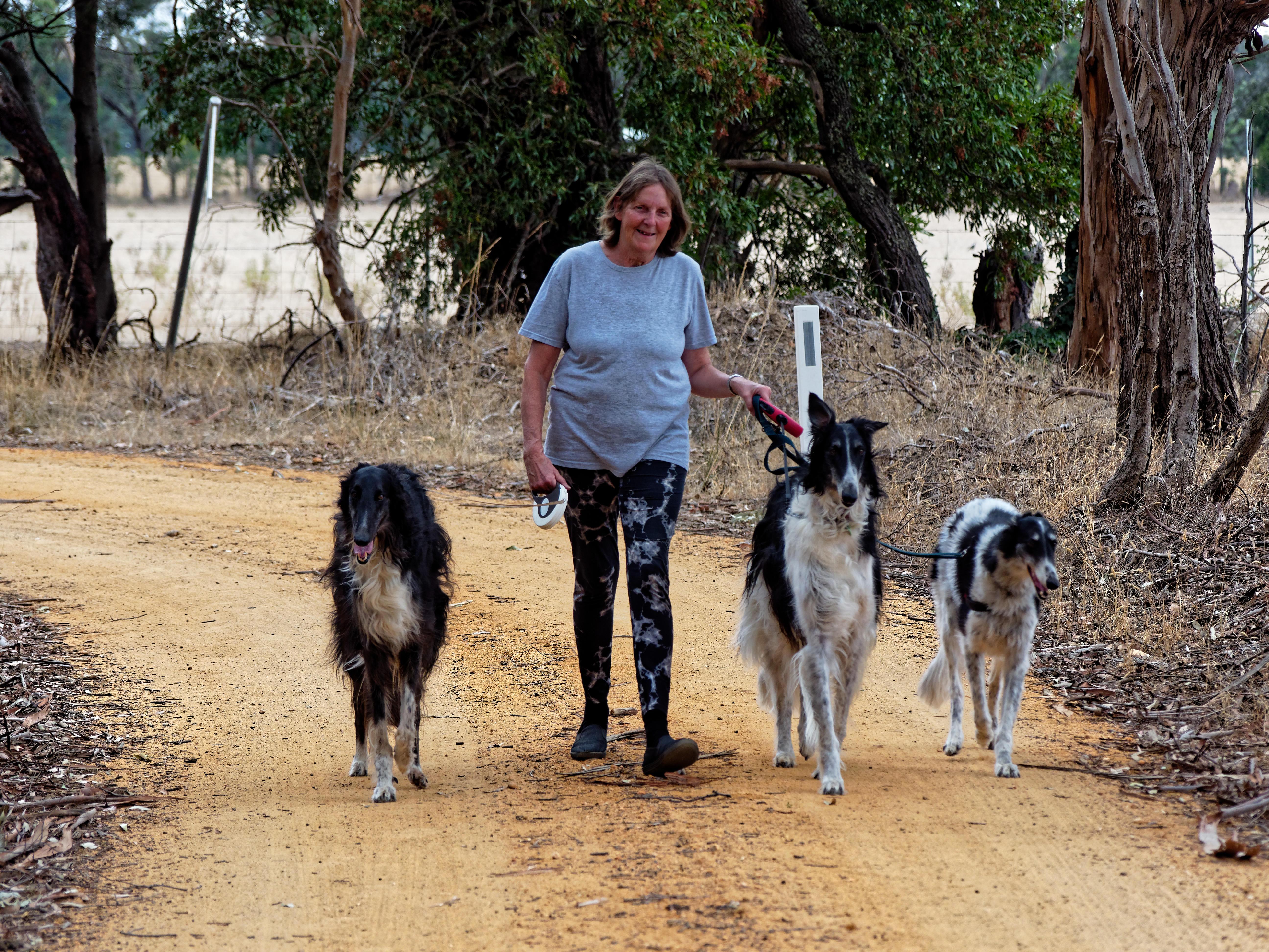 Walking-dogs-66.jpeg