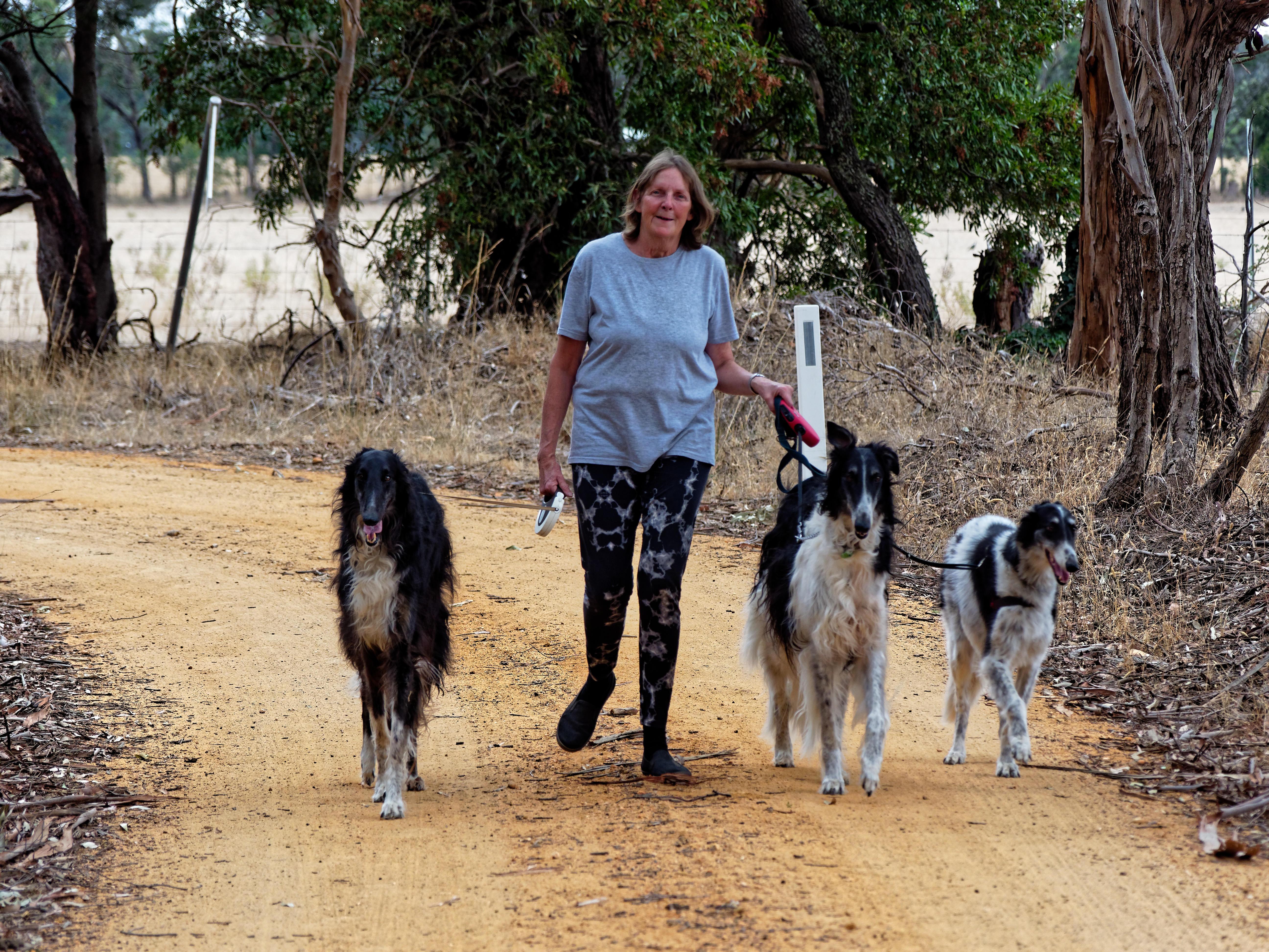 Walking-dogs-68.jpeg