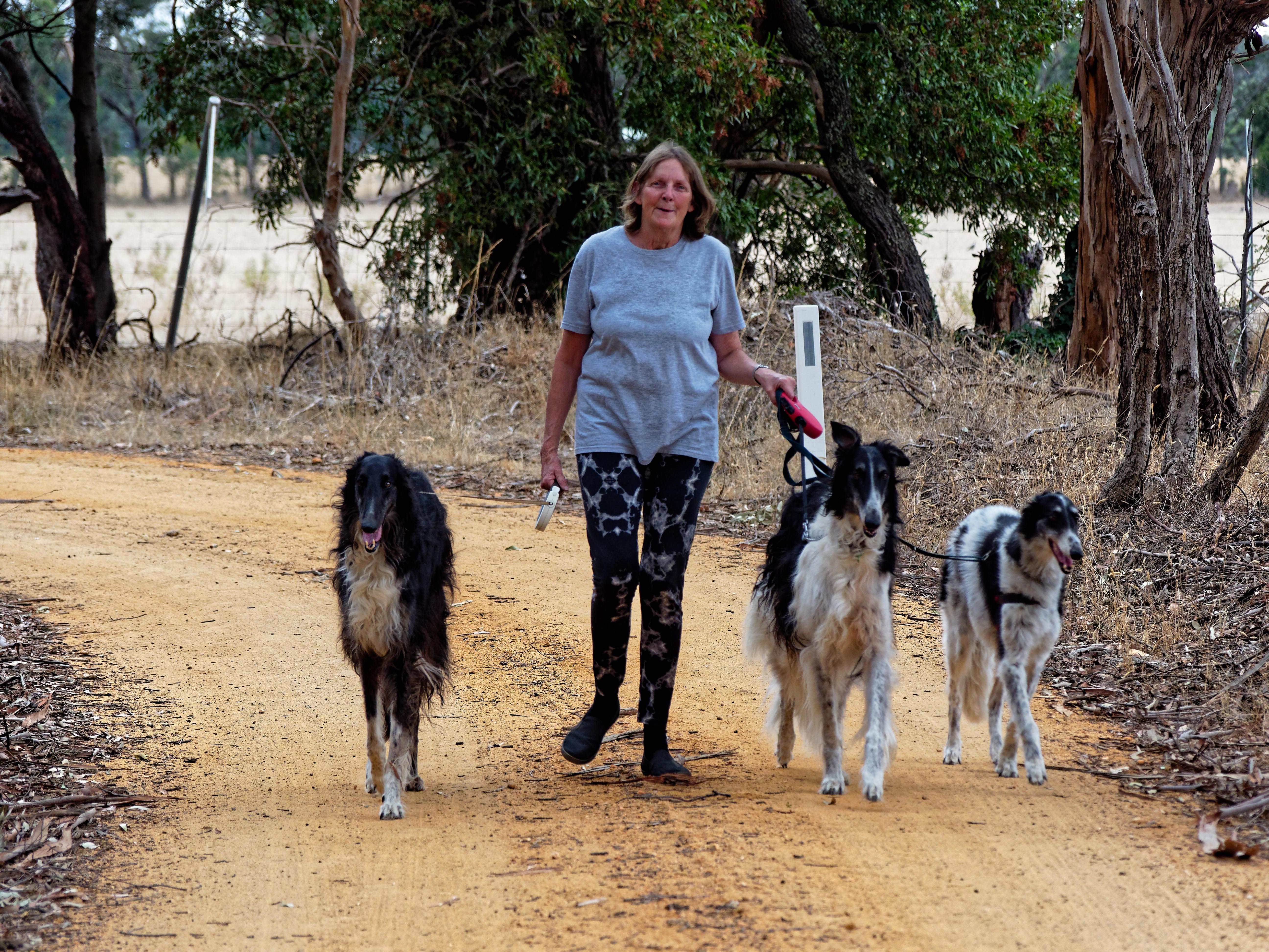 Walking-dogs-69.jpeg