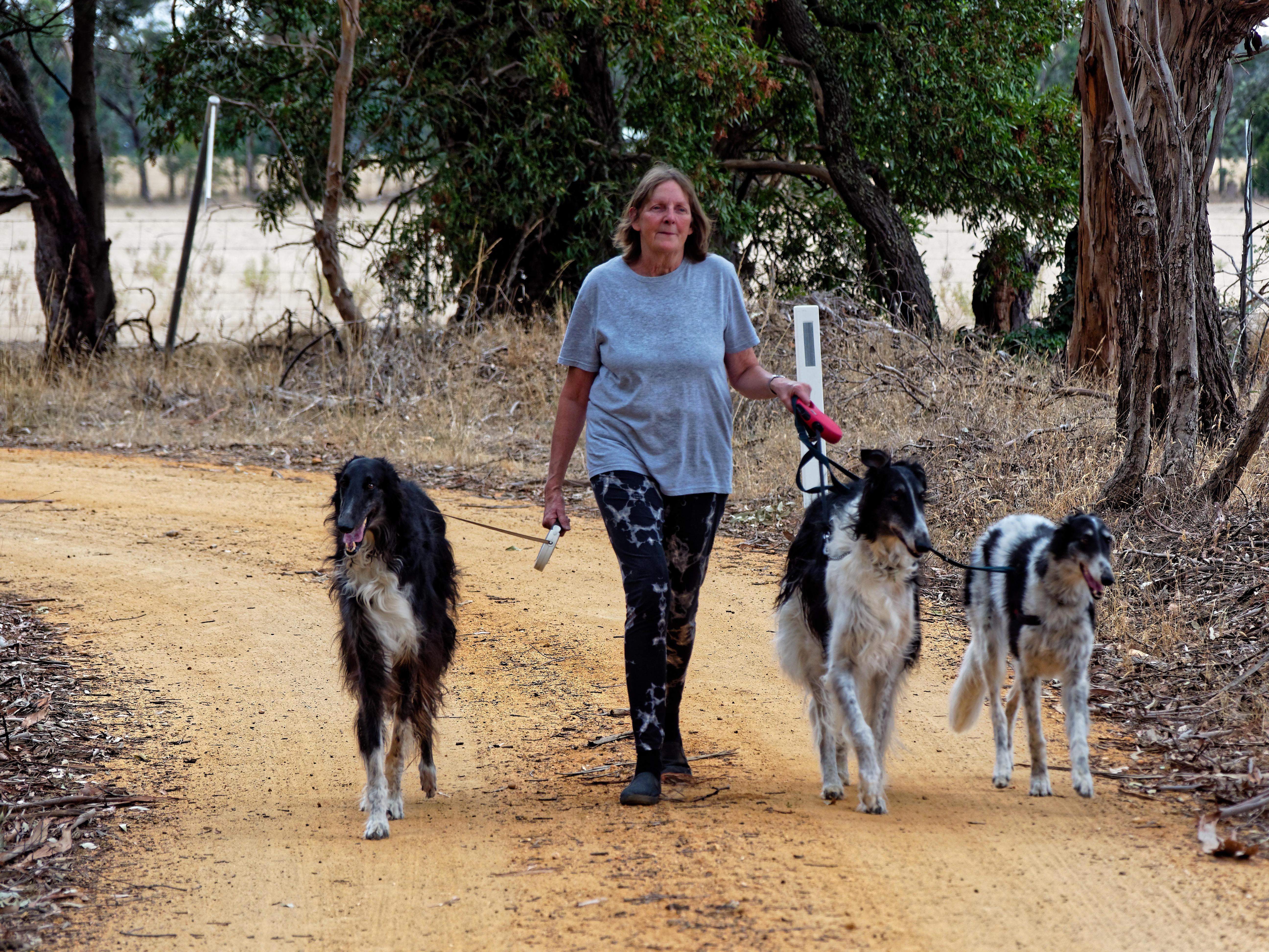 Walking-dogs-71.jpeg