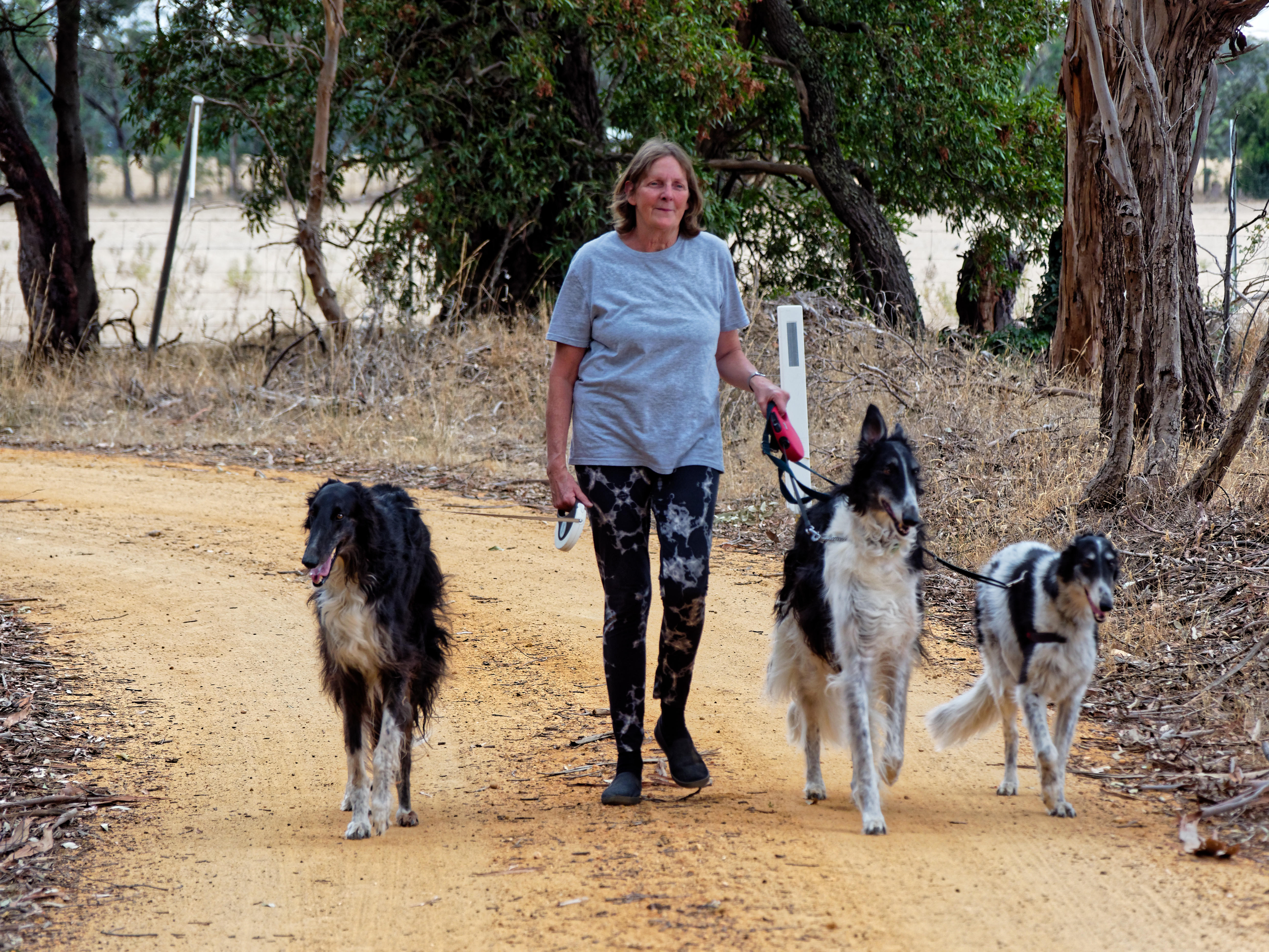 Walking-dogs-74.jpeg