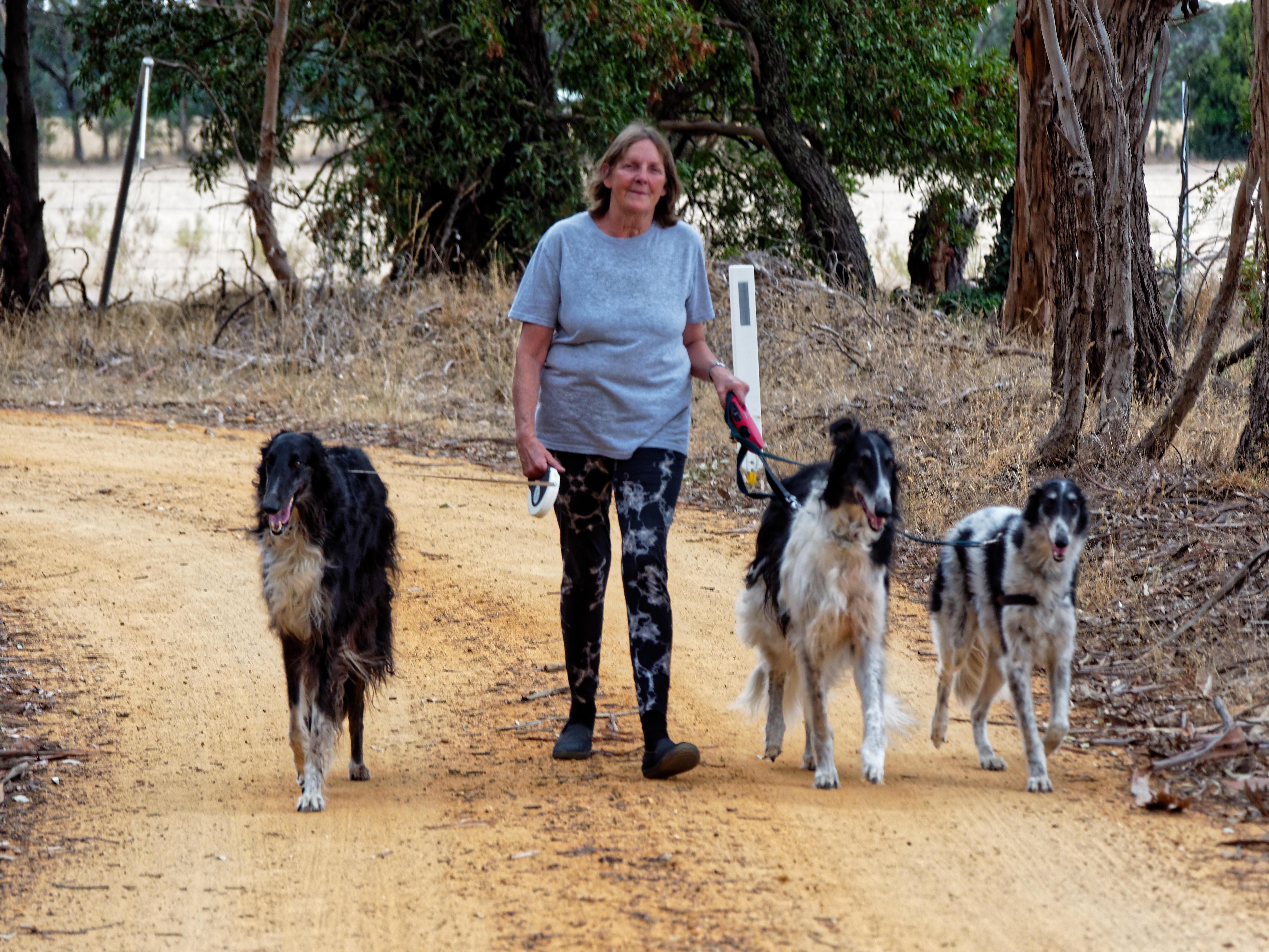 Walking-dogs-76.jpeg