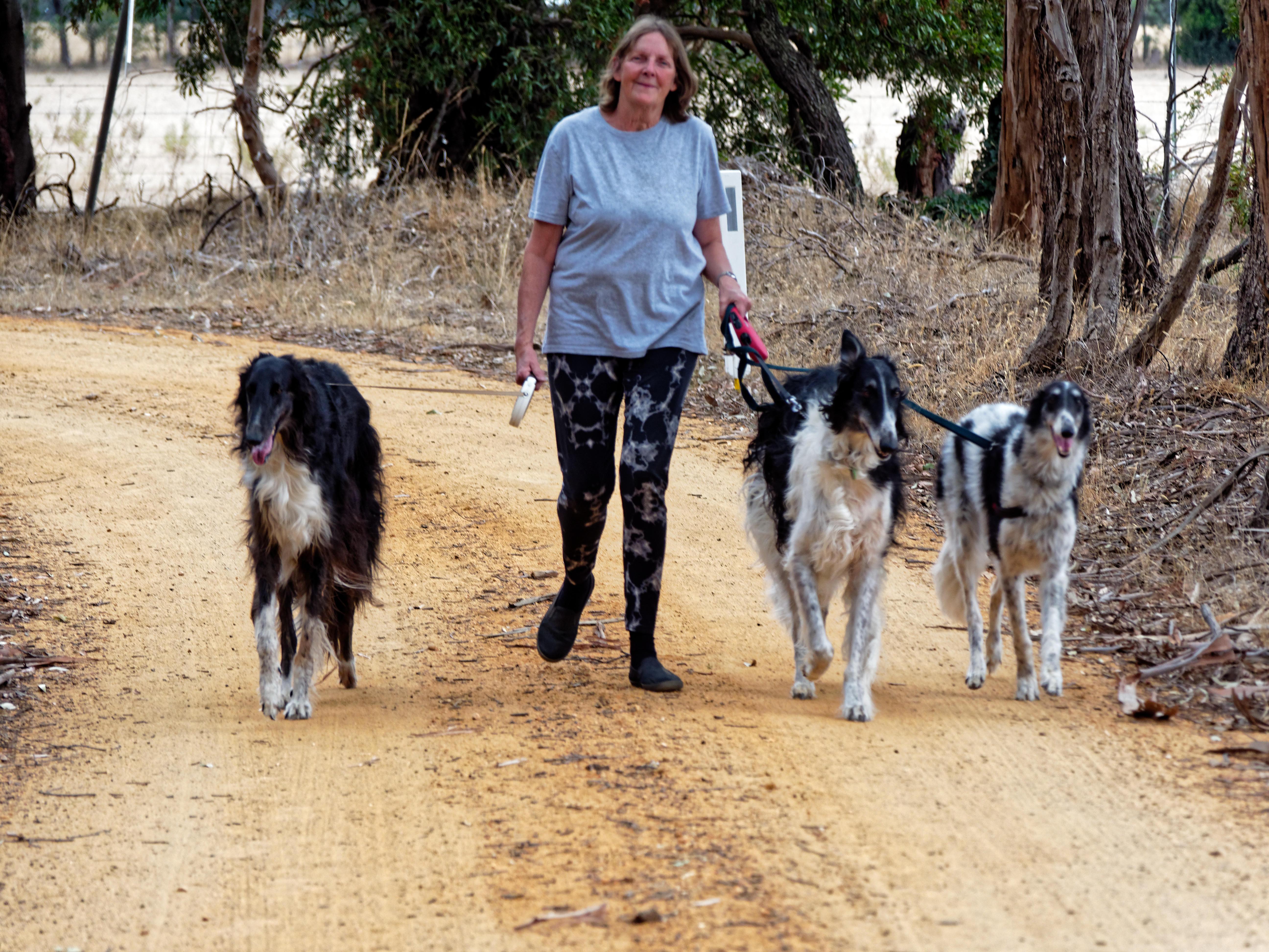Walking-dogs-78.jpeg