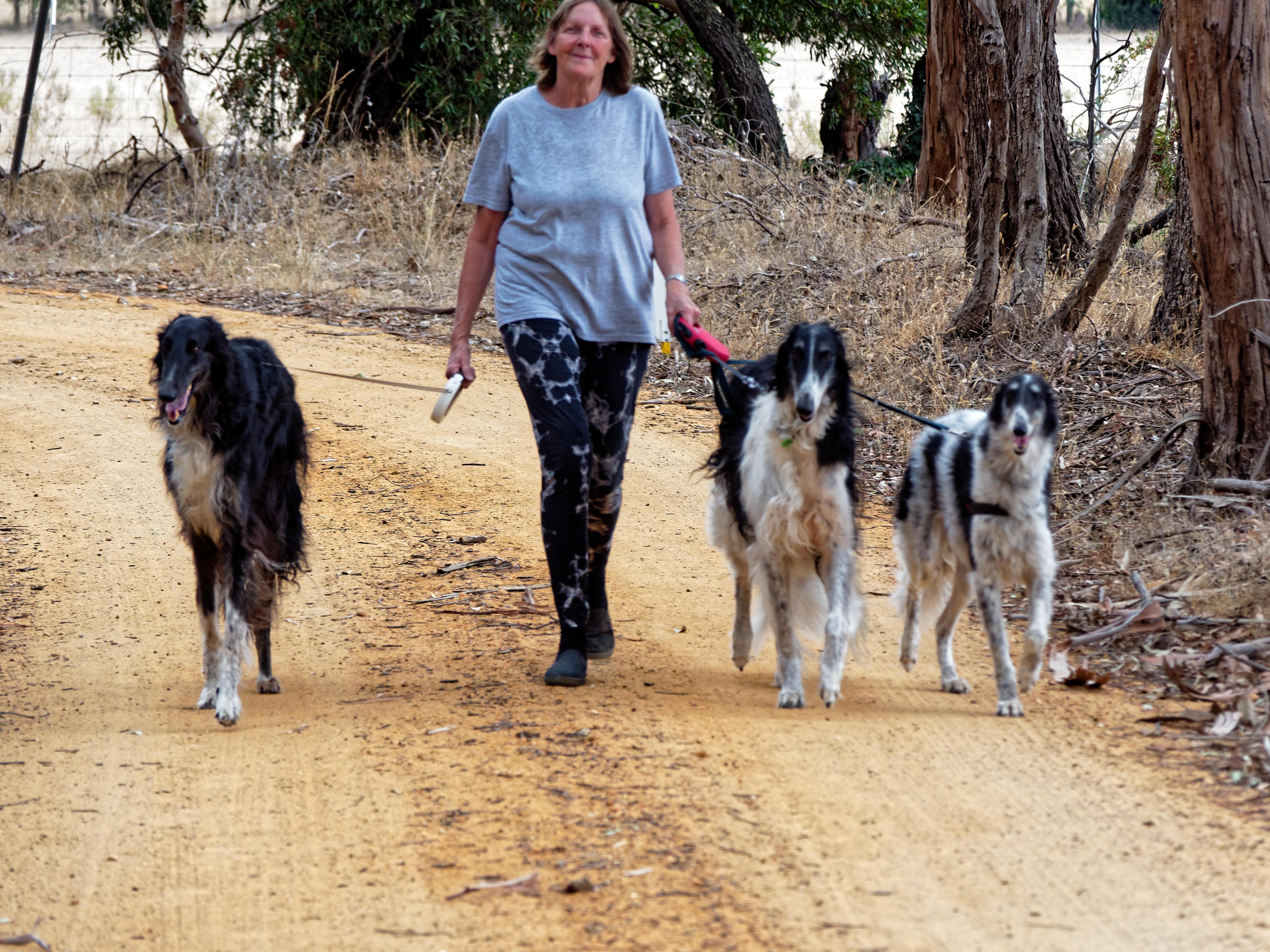Walking-dogs-82.jpeg