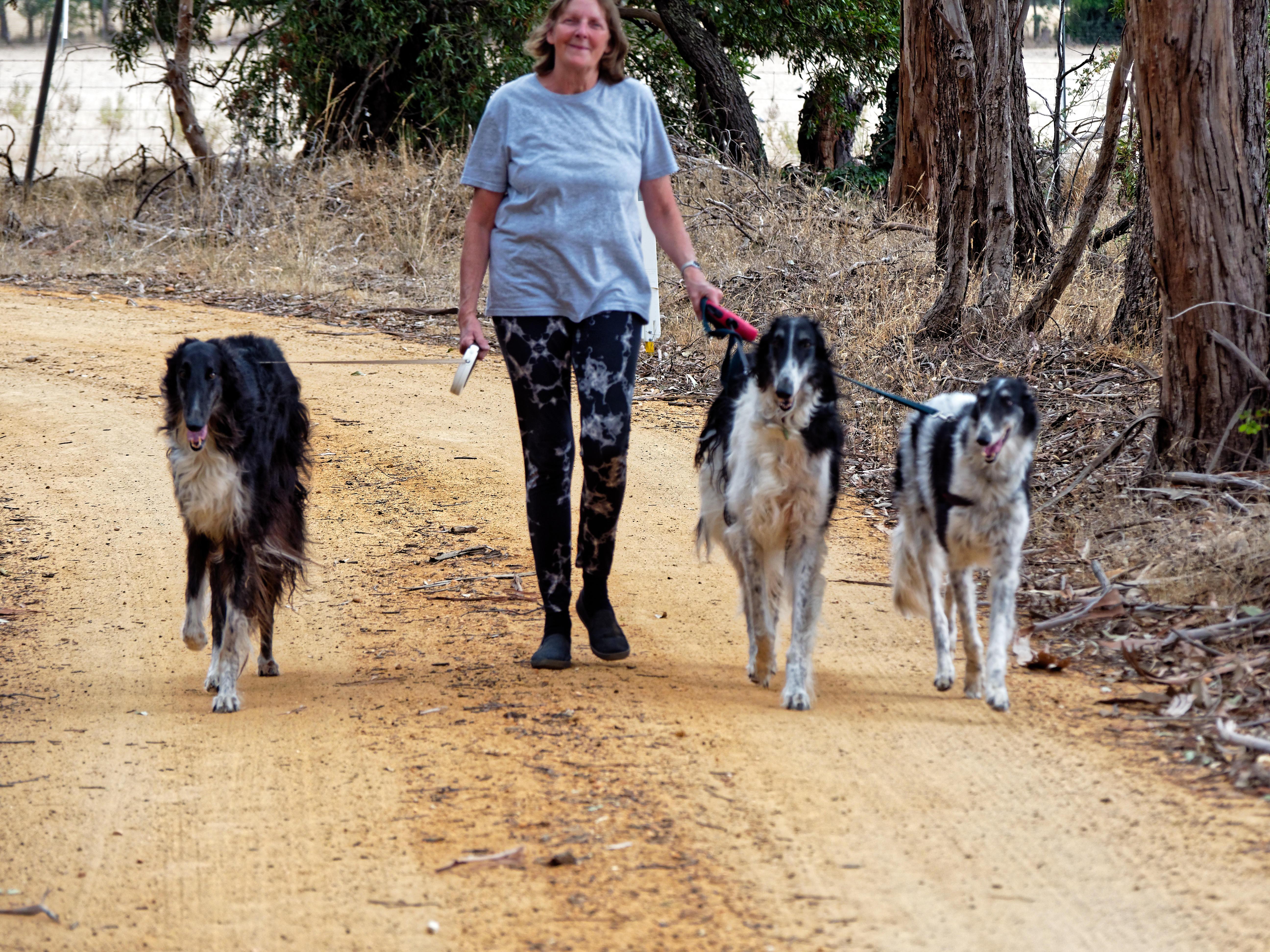 Walking-dogs-84.jpeg