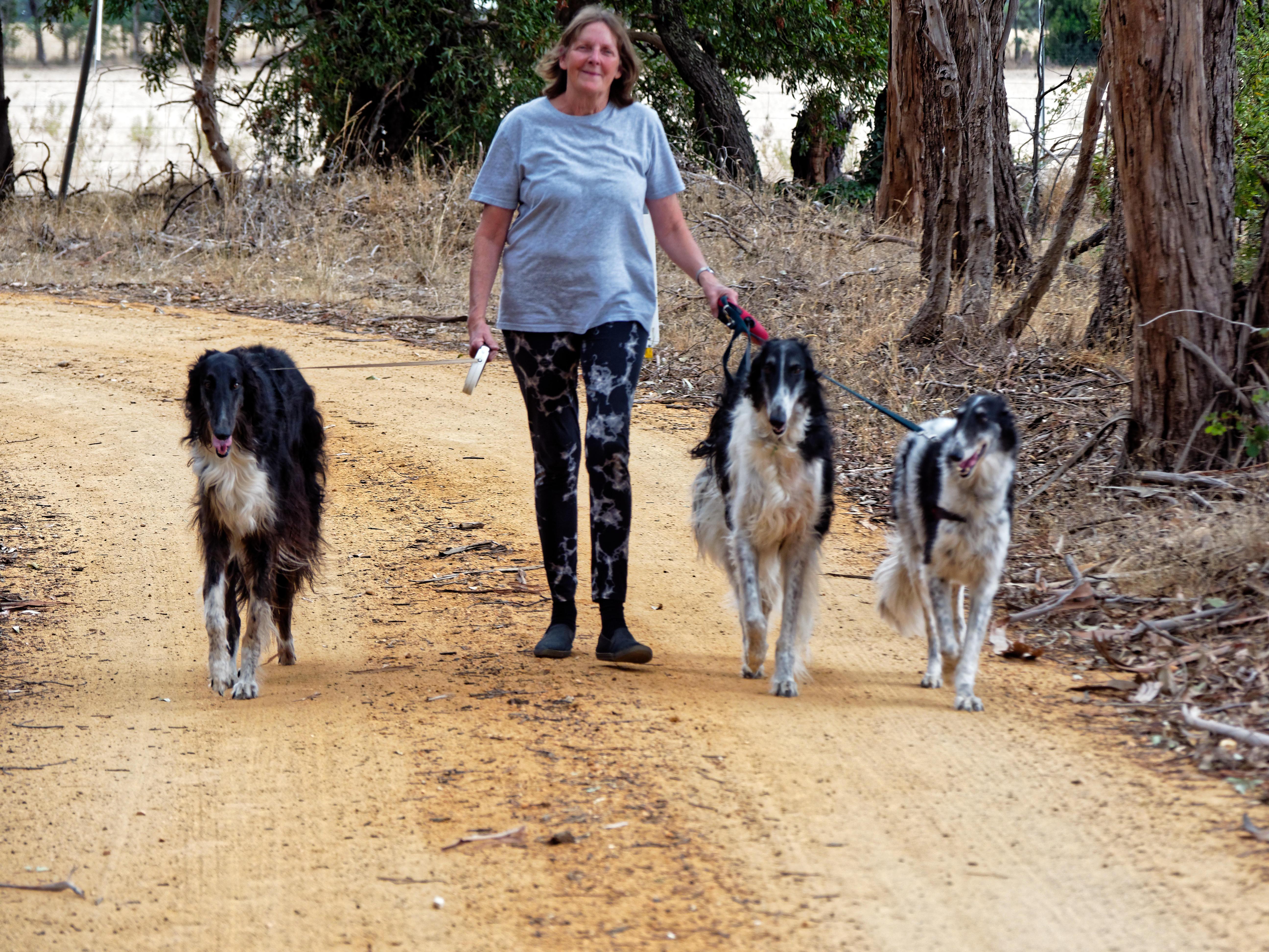 Walking-dogs-85.jpeg