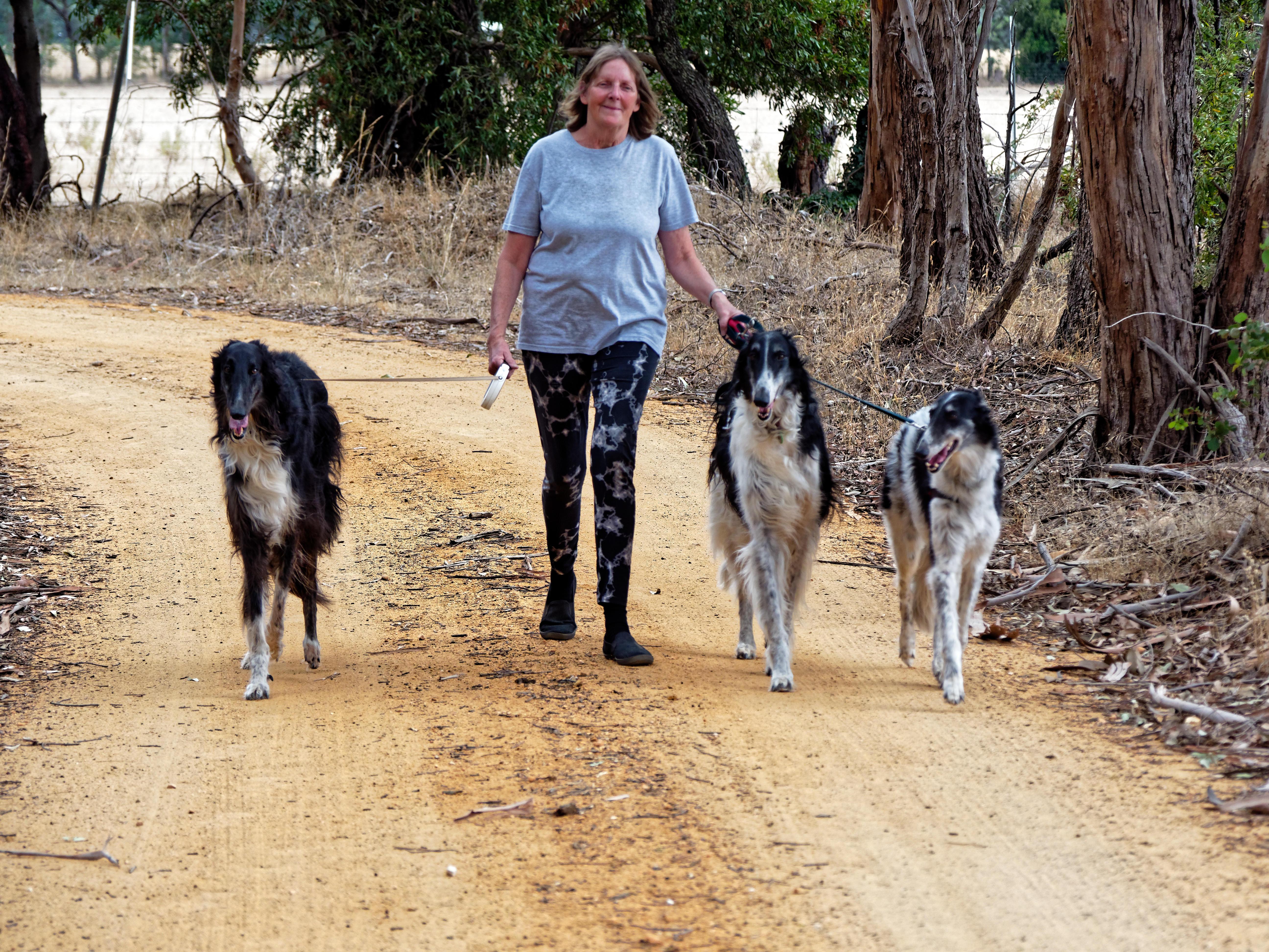 Walking-dogs-86.jpeg