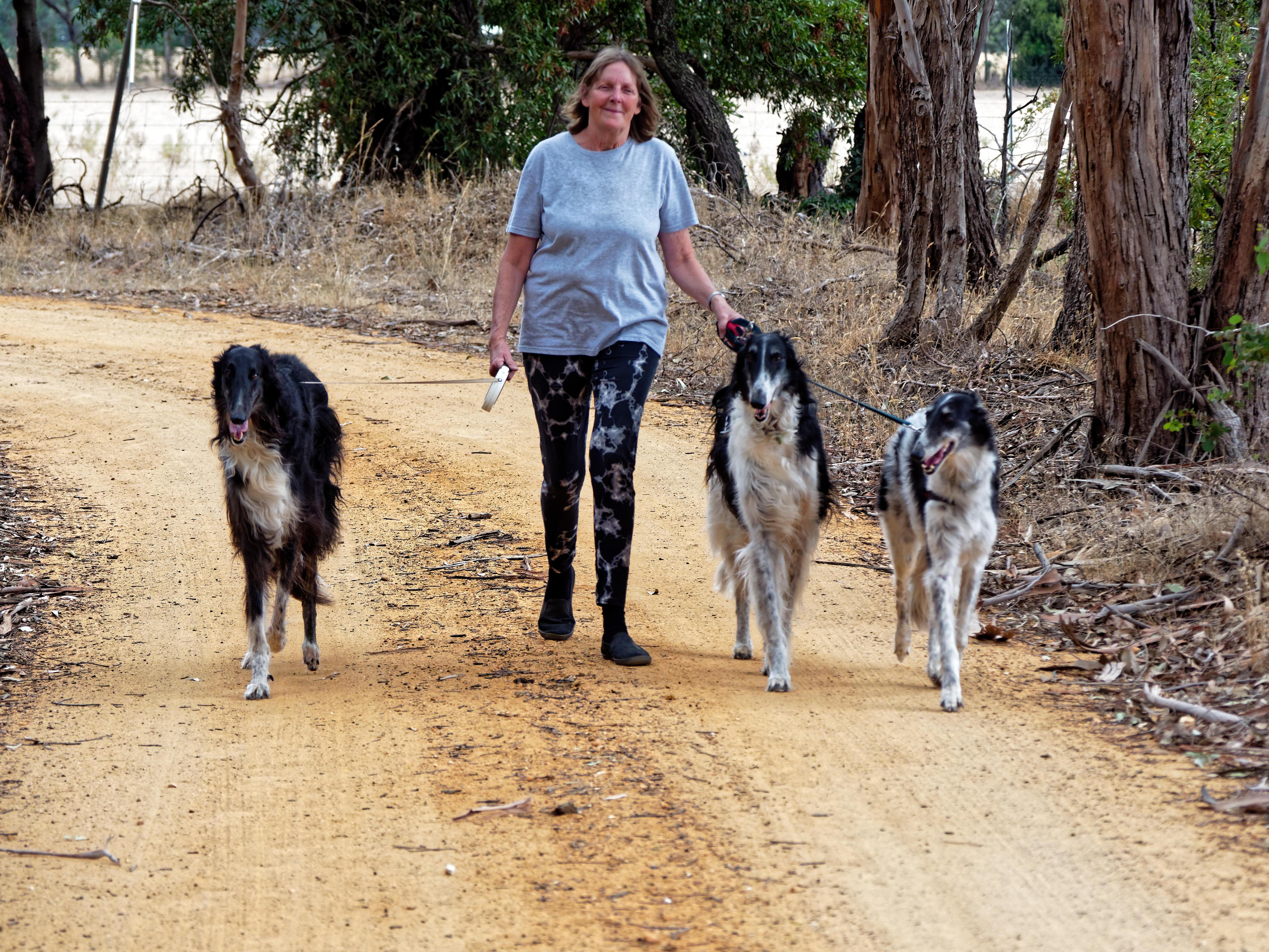 Walking-dogs-87.jpeg