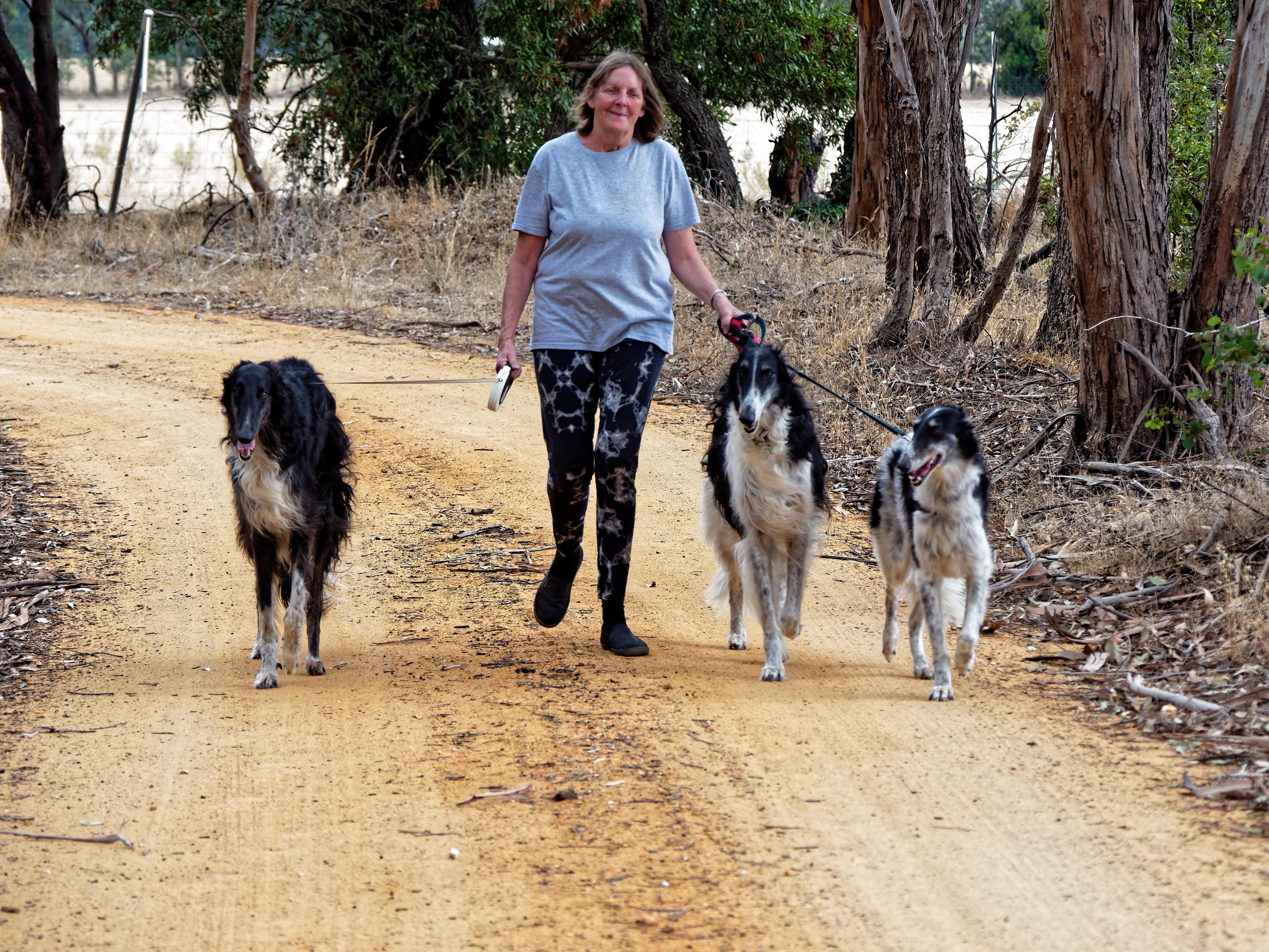 Walking-dogs-88.jpeg