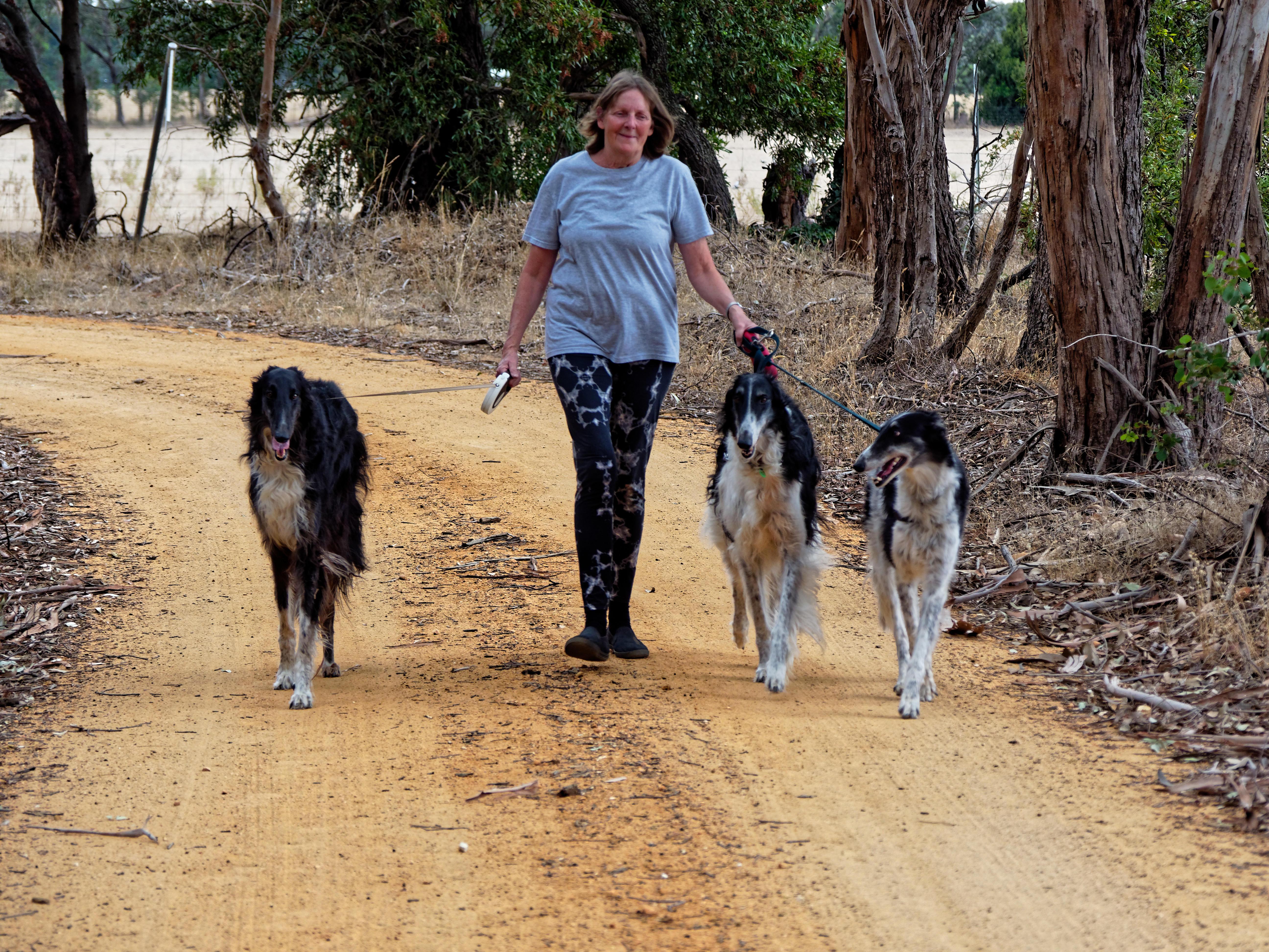 Walking-dogs-89.jpeg