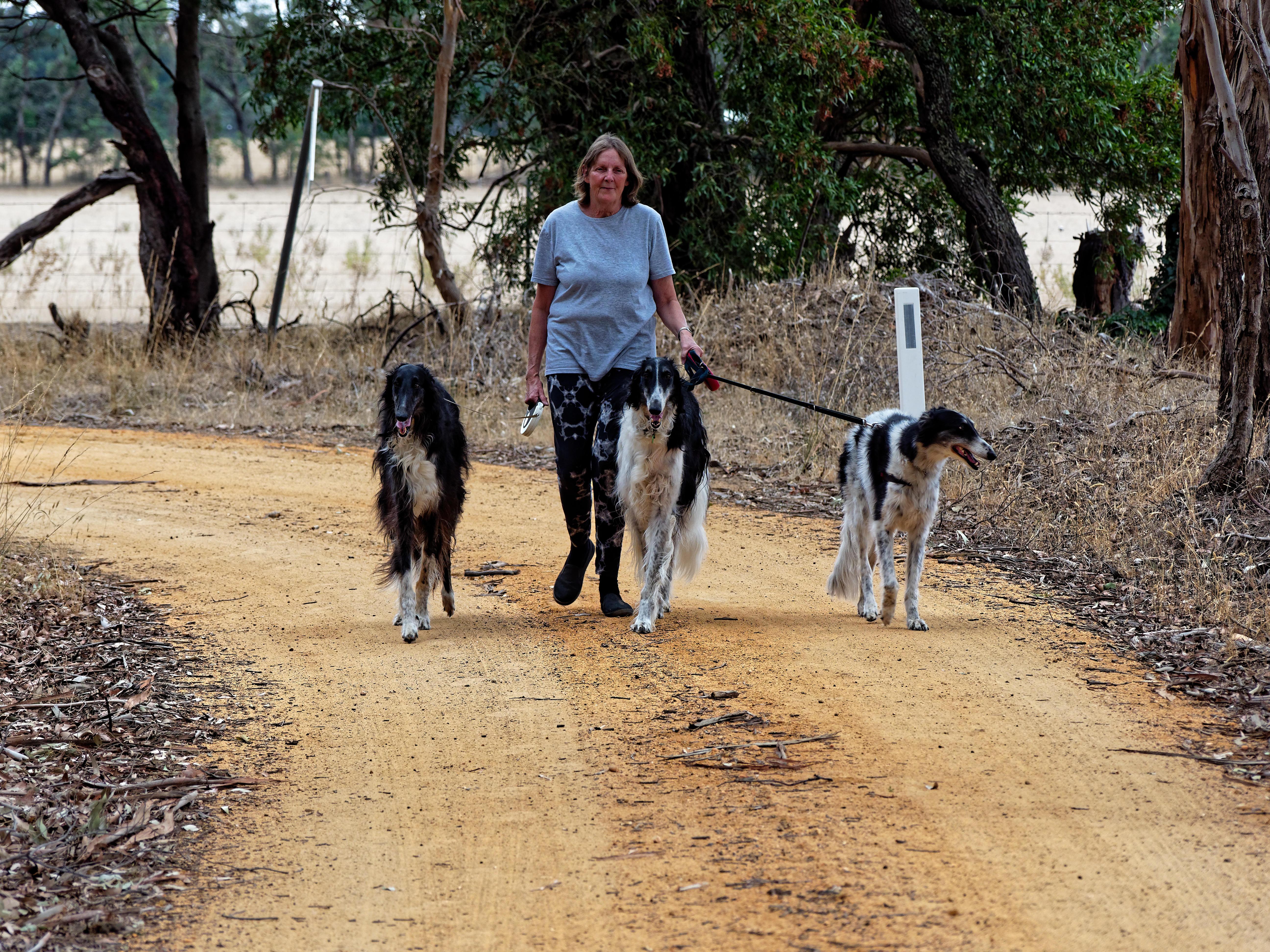 Walking-dogs-9.jpeg