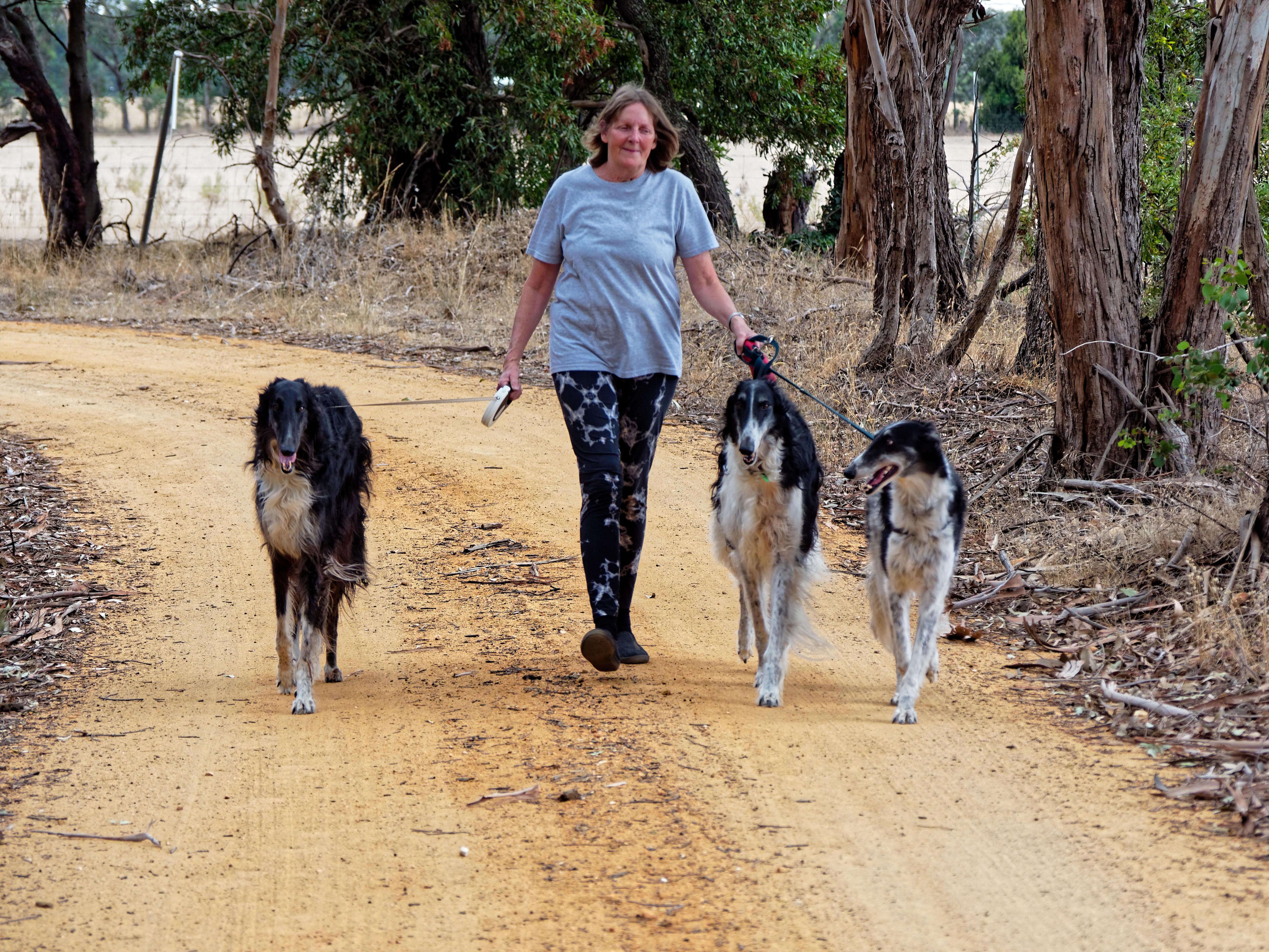 Walking-dogs-90.jpeg
