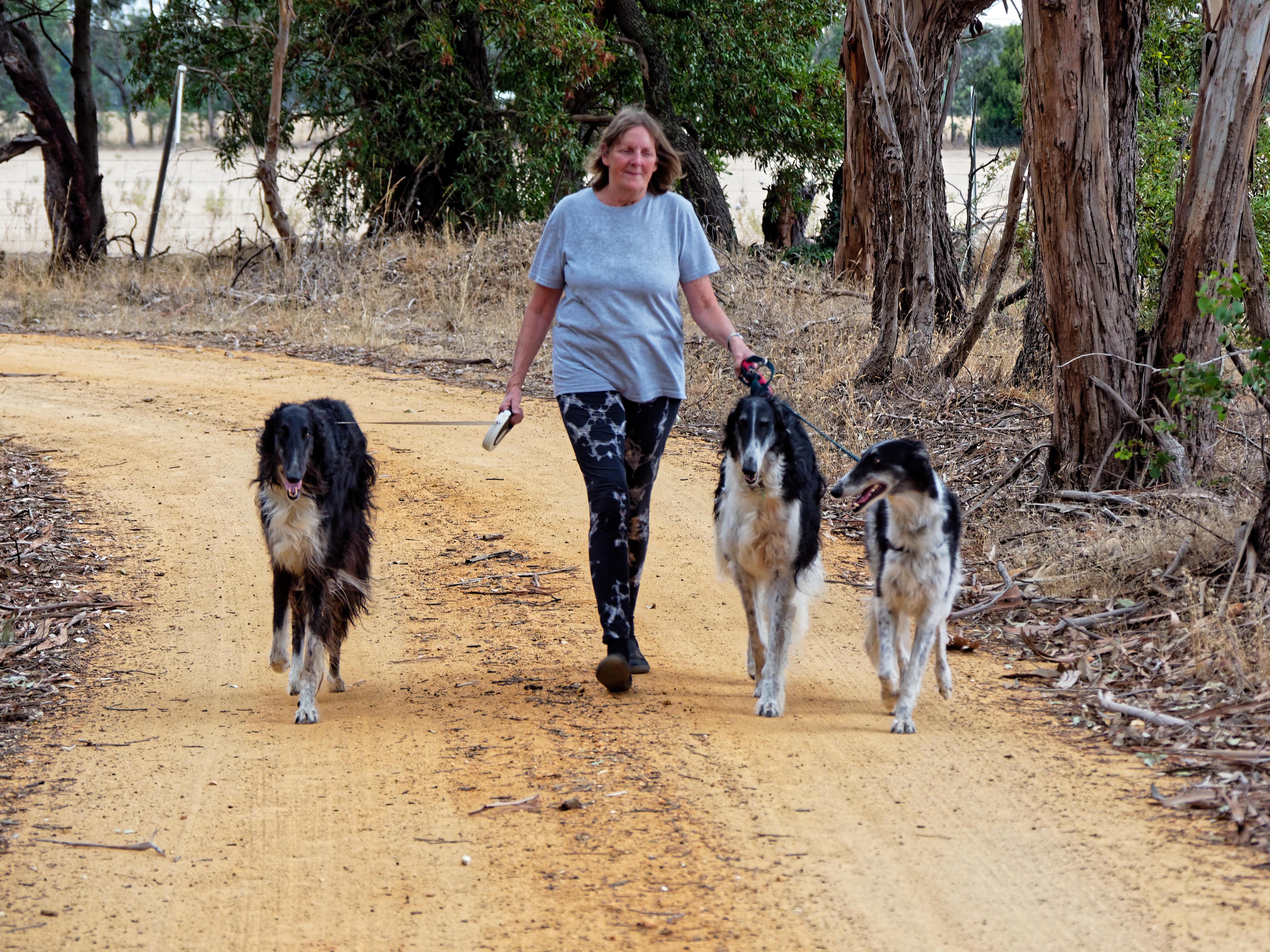 Walking-dogs-91.jpeg