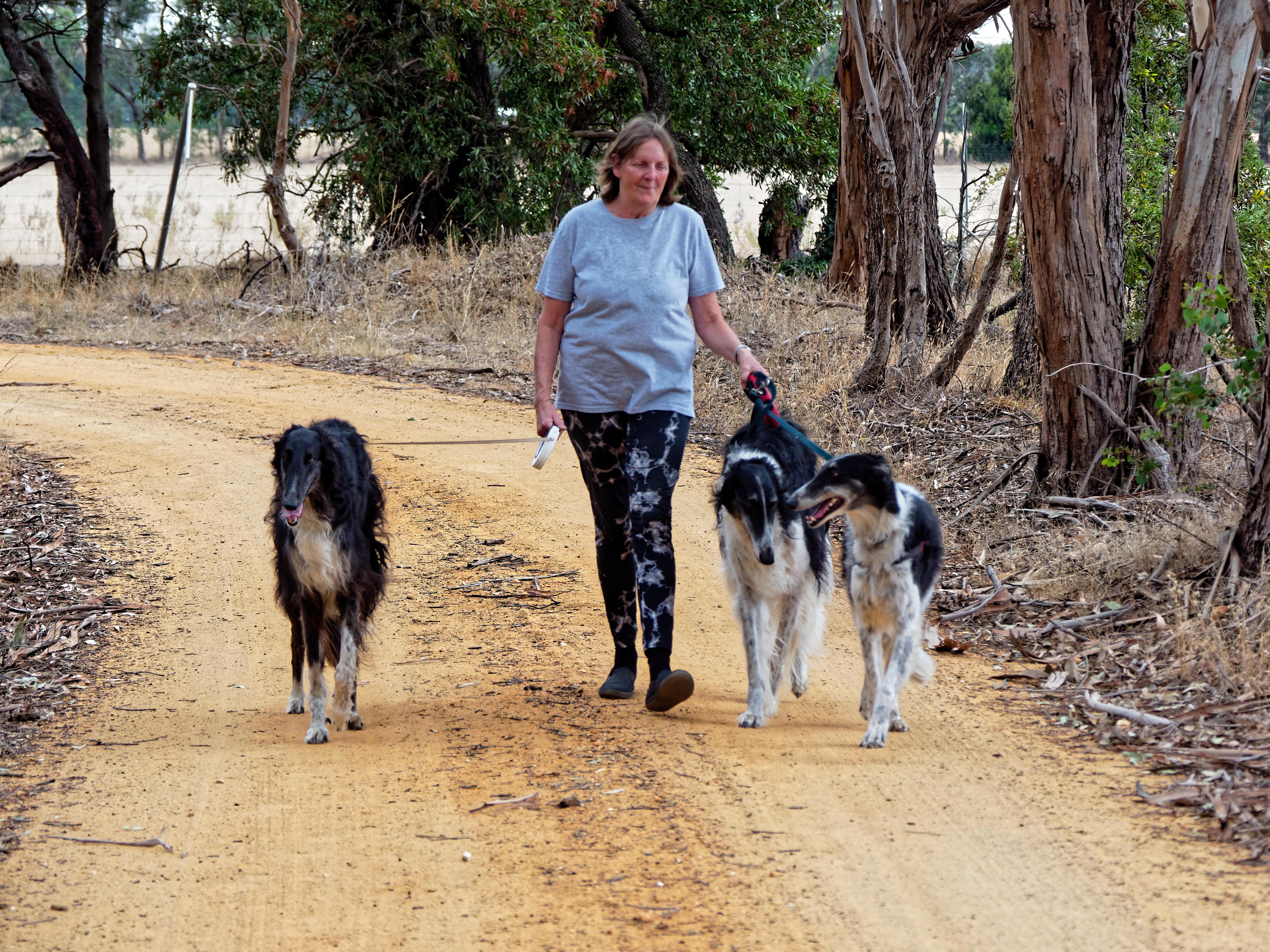 Walking-dogs-95.jpeg