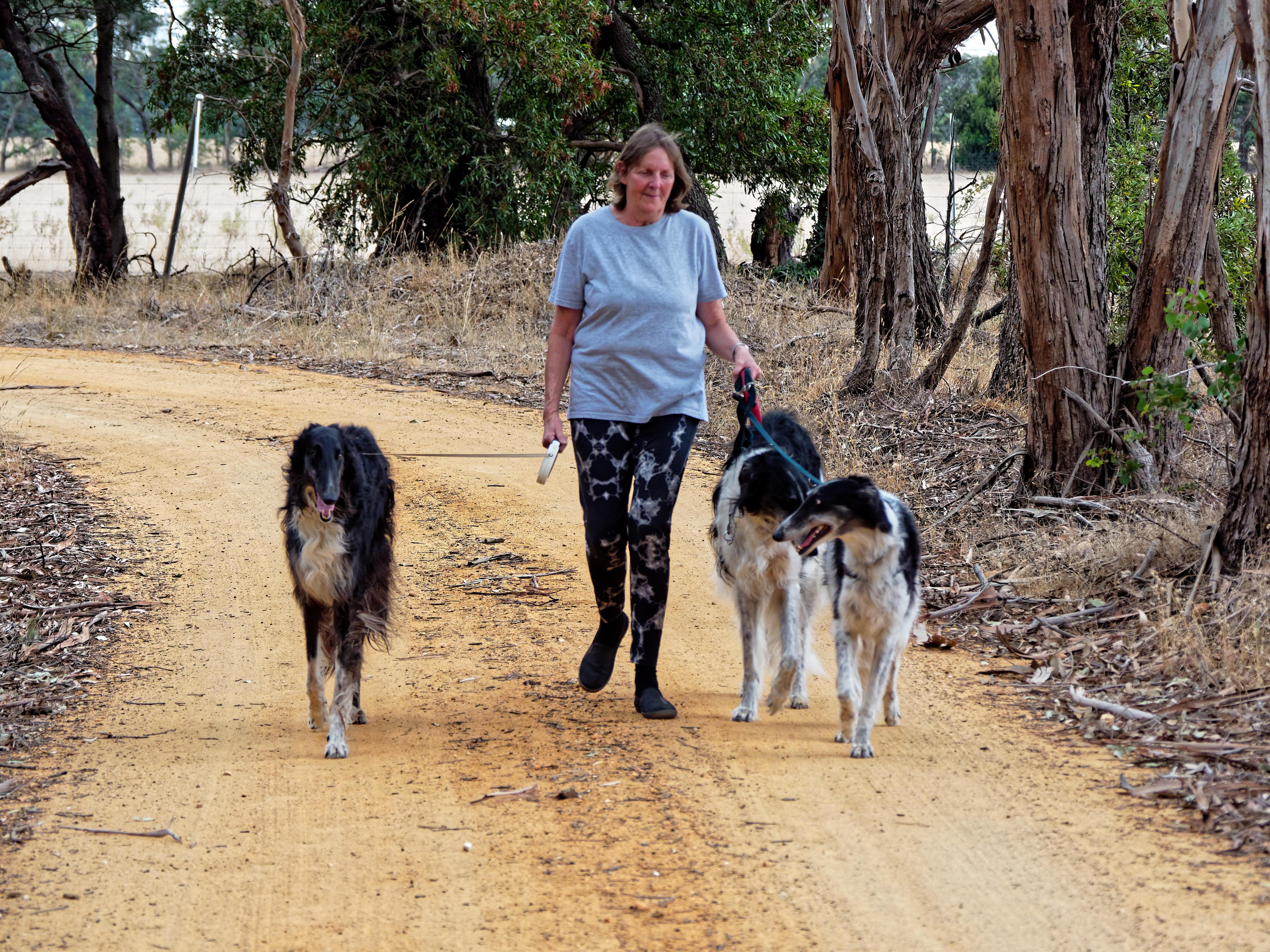 Walking-dogs-97.jpeg
