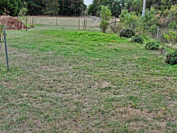 Irrigated-grass.jpeg