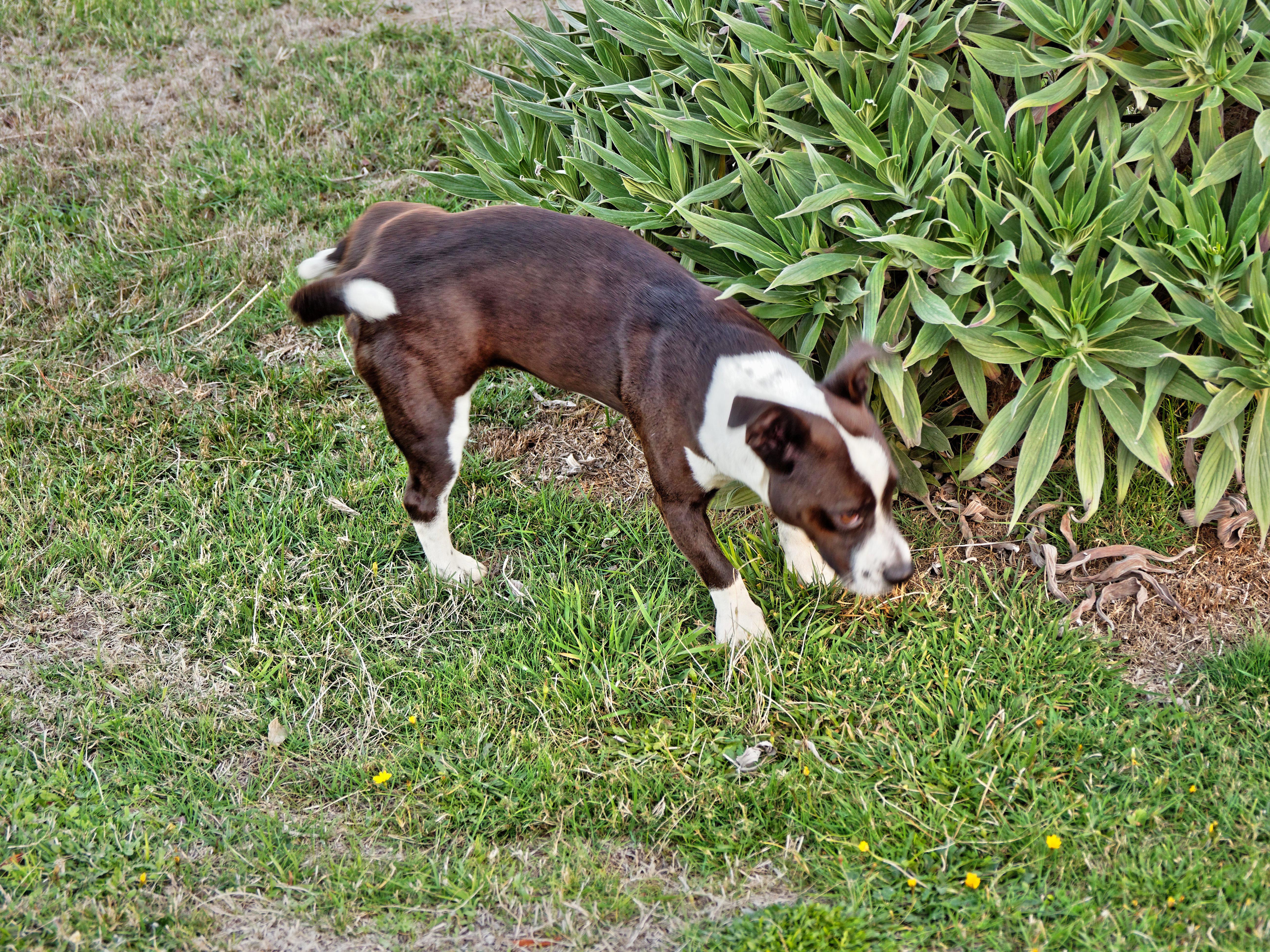 Stray-dog-4.jpeg