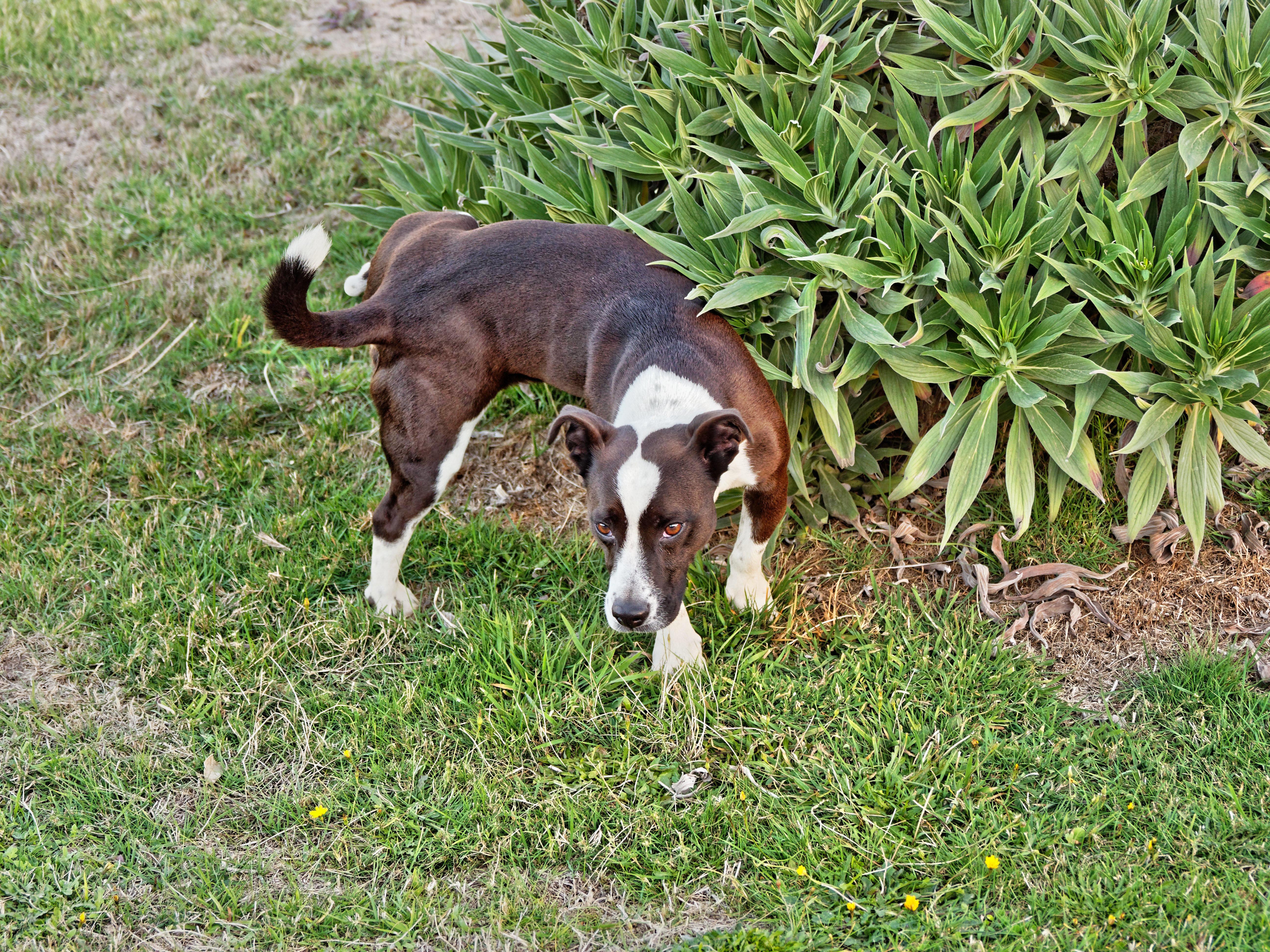 Stray-dog-5.jpeg