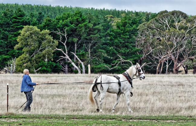 Horse-training-2.jpeg