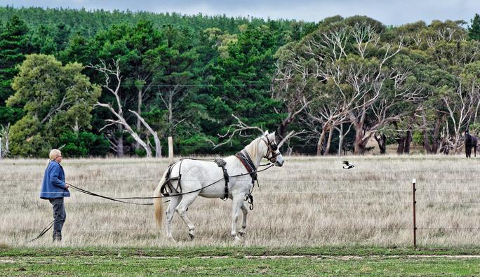 Horse-training-3.jpeg