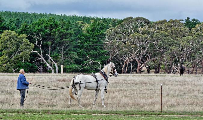 Horse-training-4.jpeg