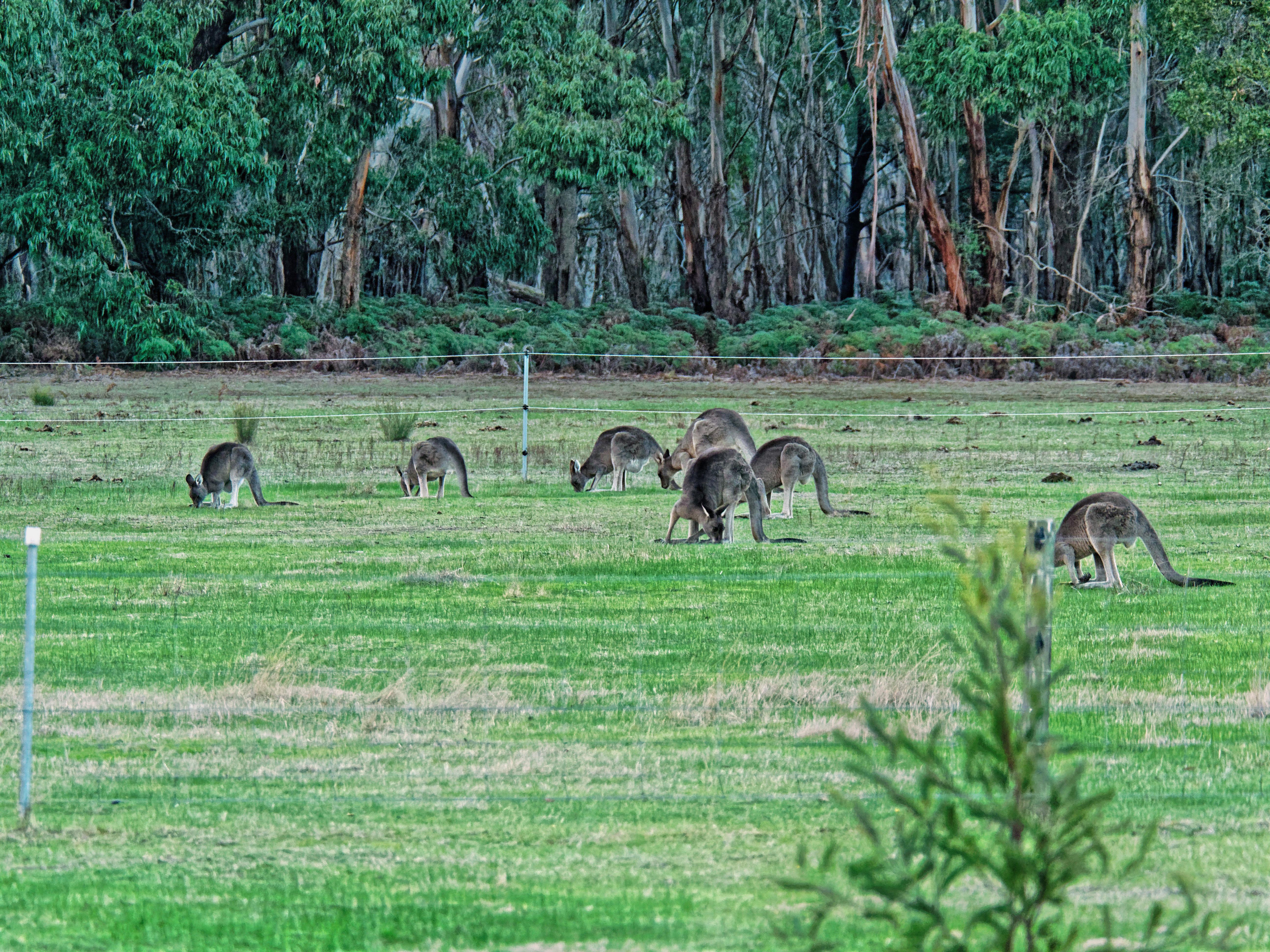 This should be Kangaroos-1.jpeg.  Is it missing?