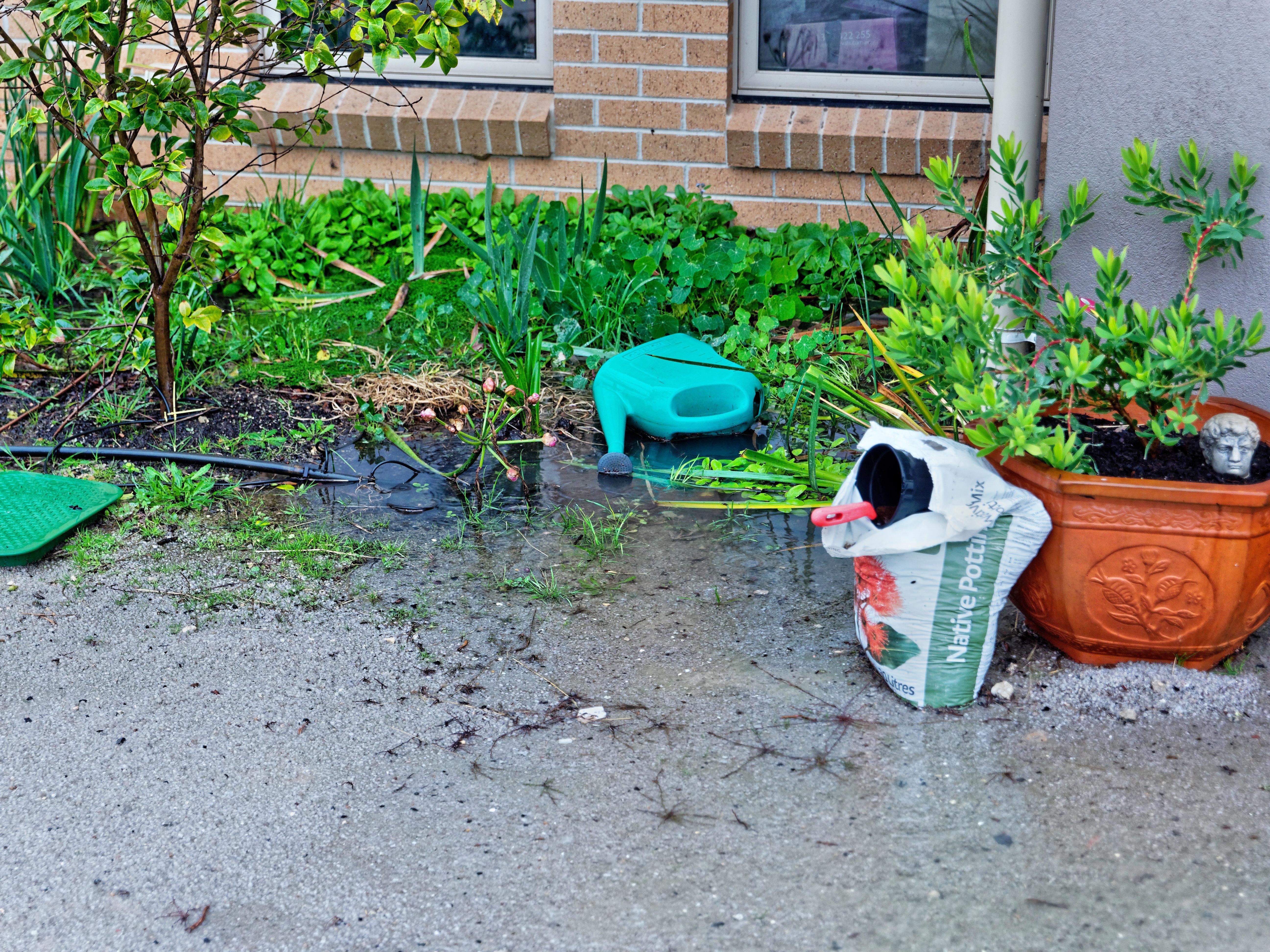 Rain-3.jpeg