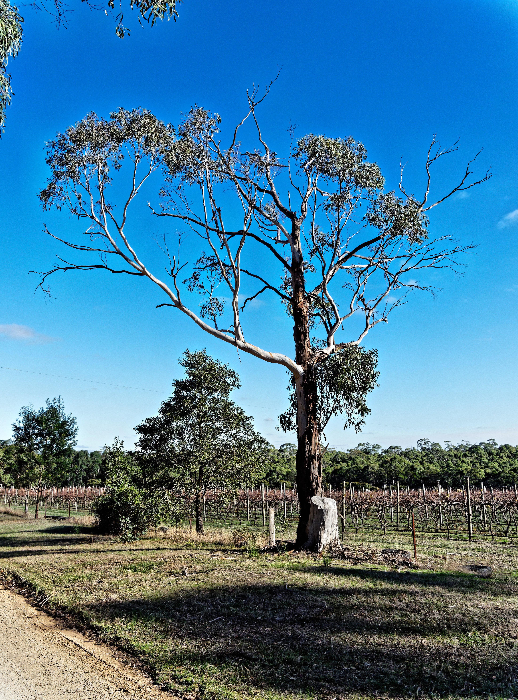 Tree-2.jpeg