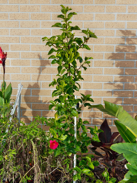Hibiscus-flower-6.jpeg
