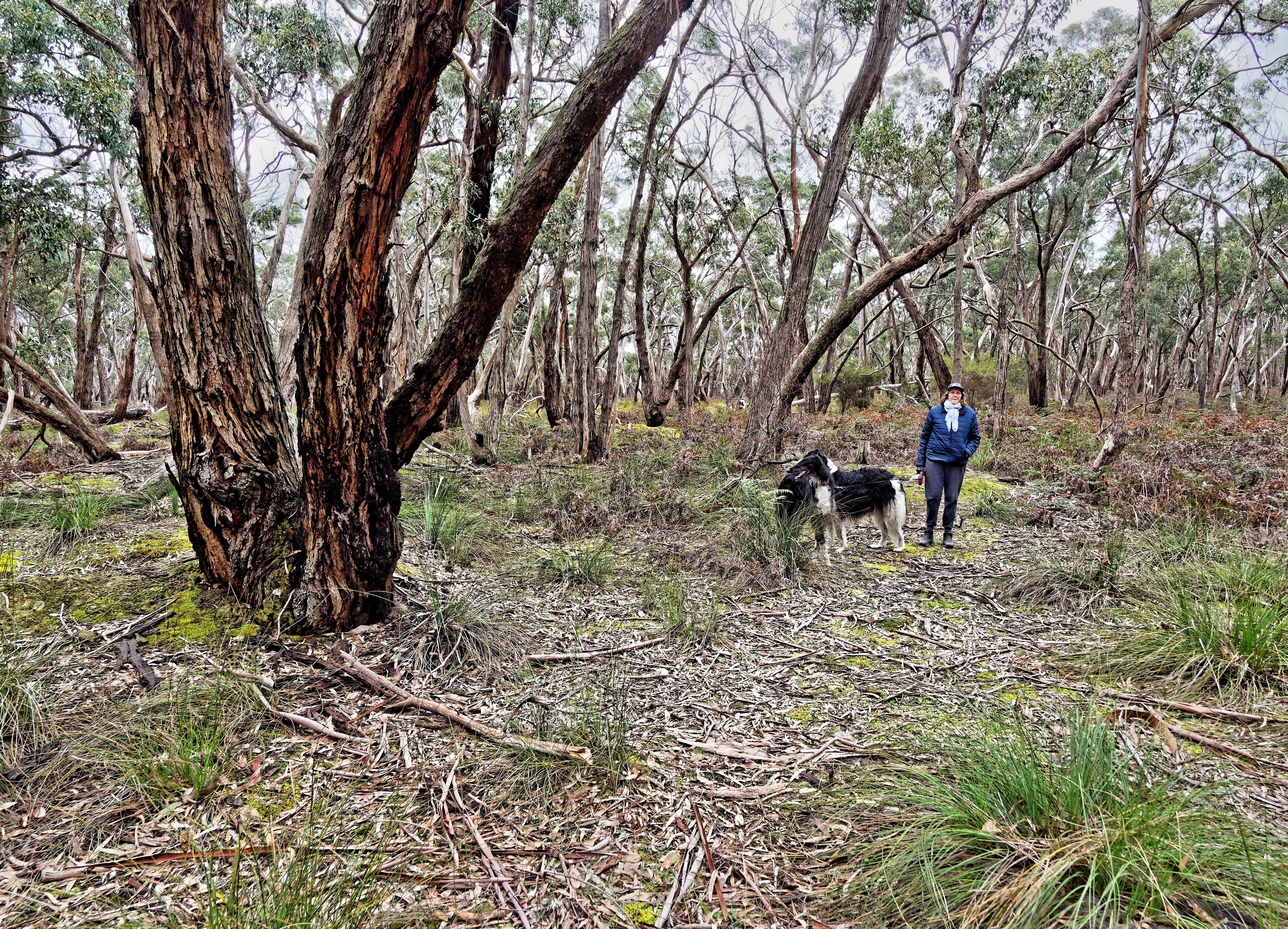 Dereel-bushland-reserve-1.jpeg