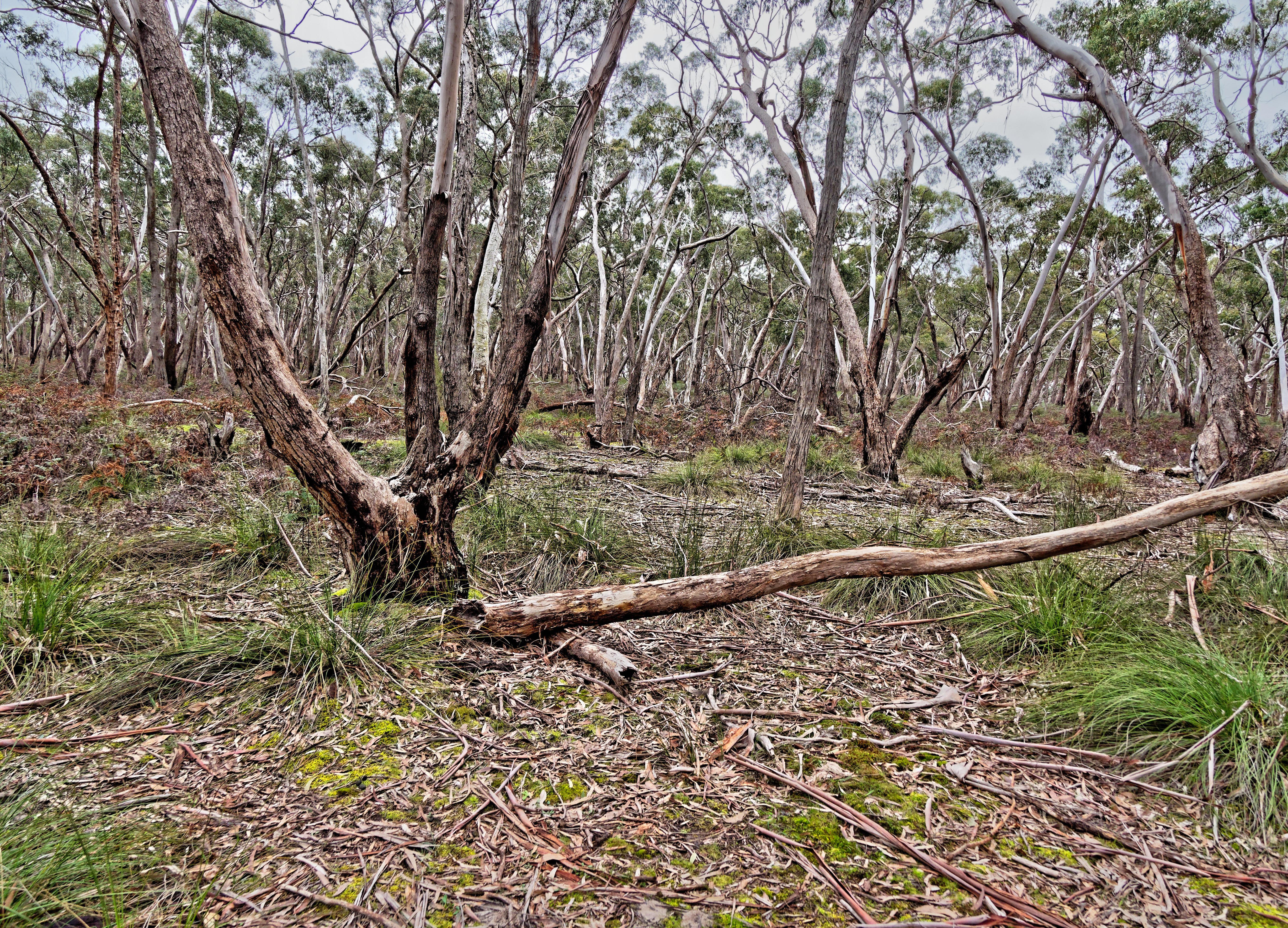 Dereel-bushland-reserve-10.jpeg