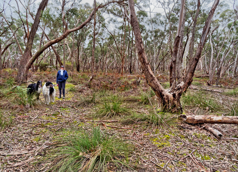 Dereel-bushland-reserve-11.jpeg