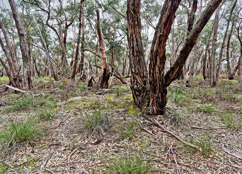 Dereel-bushland-reserve-2.jpeg