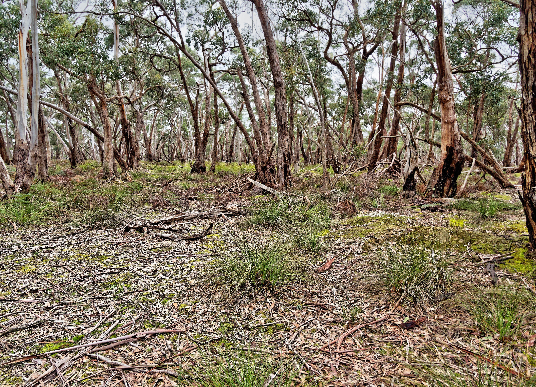 Dereel-bushland-reserve-3.jpeg