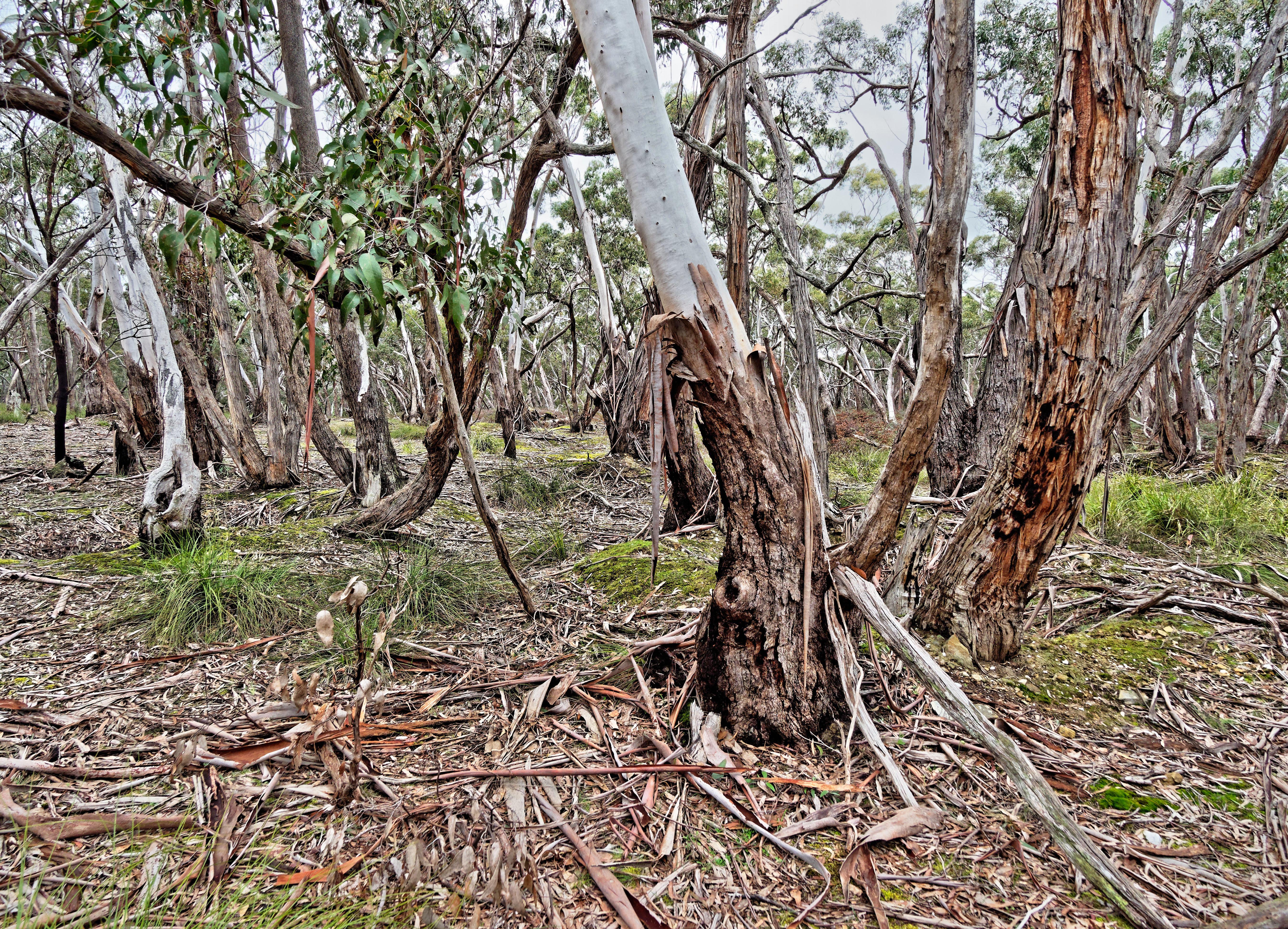 Dereel-bushland-reserve-6.jpeg