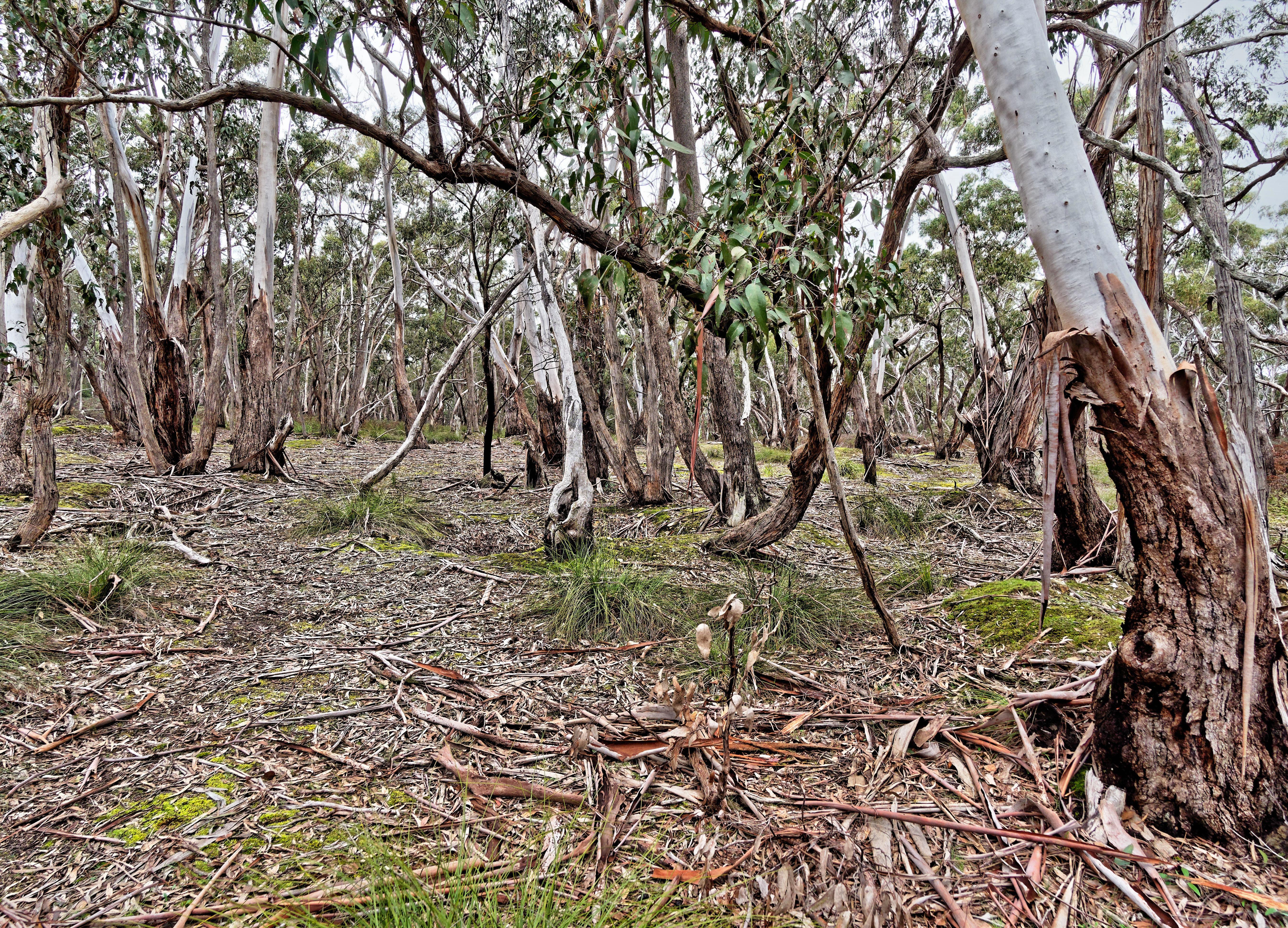 Dereel-bushland-reserve-7.jpeg