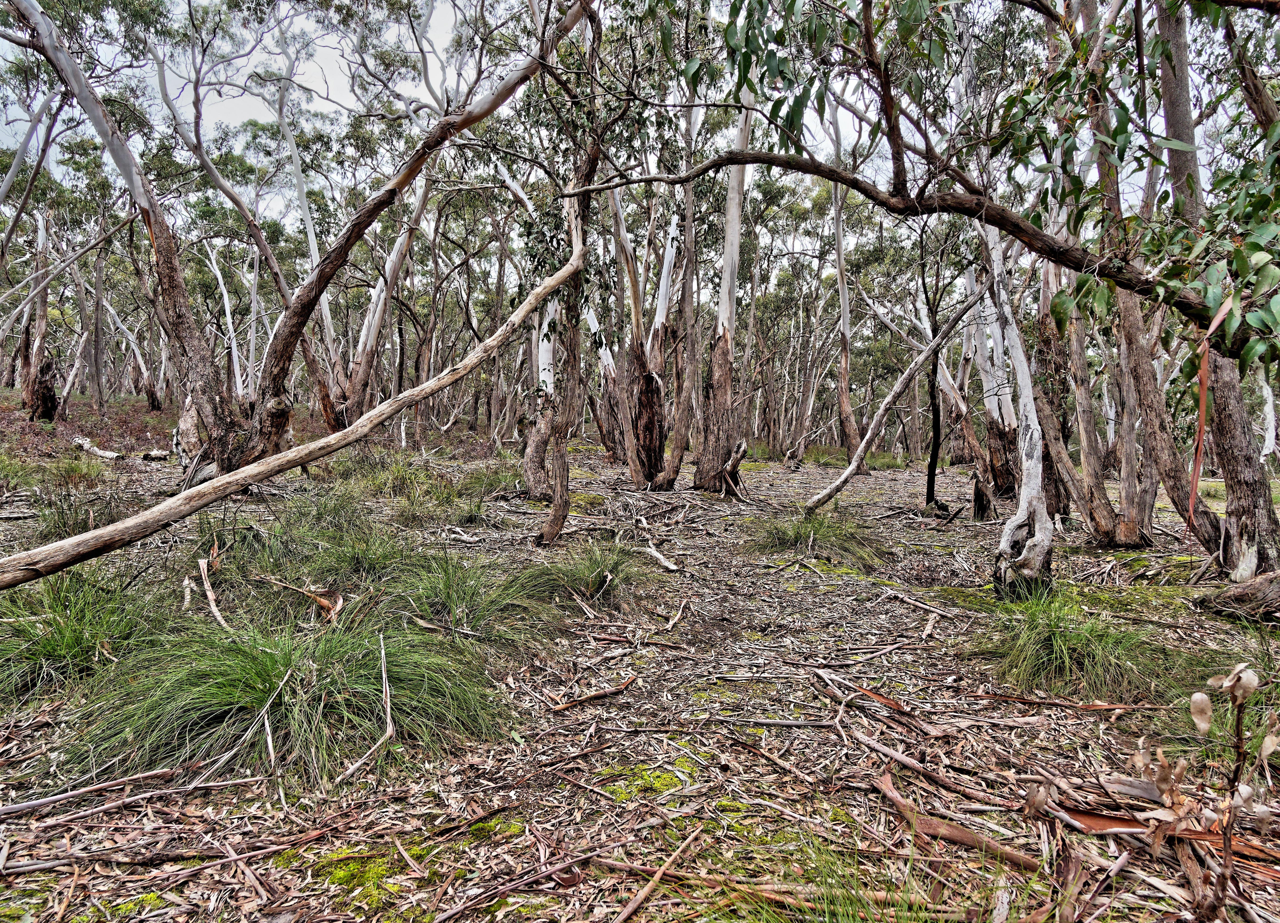 Dereel-bushland-reserve-8.jpeg