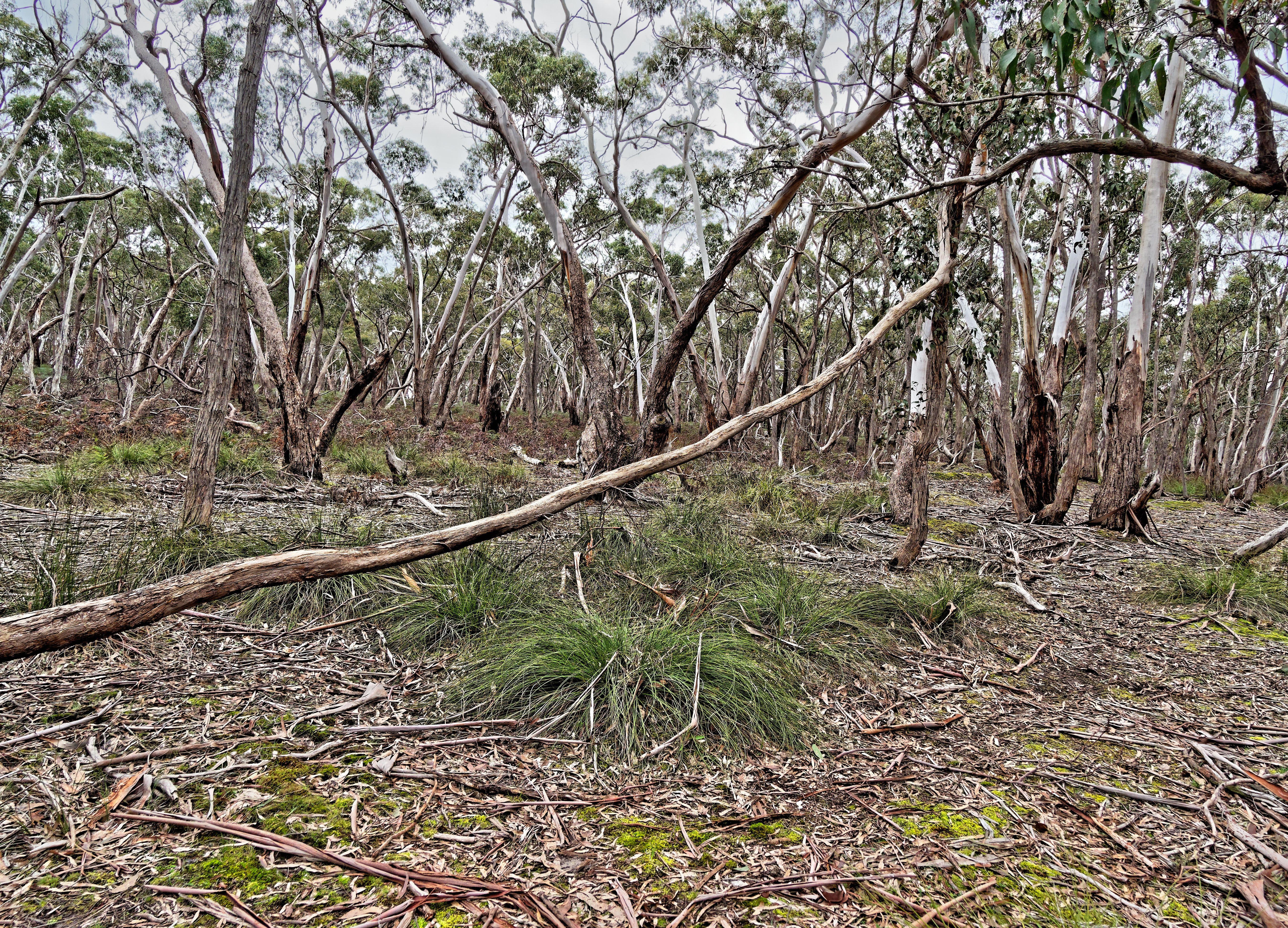 Dereel-bushland-reserve-9.jpeg