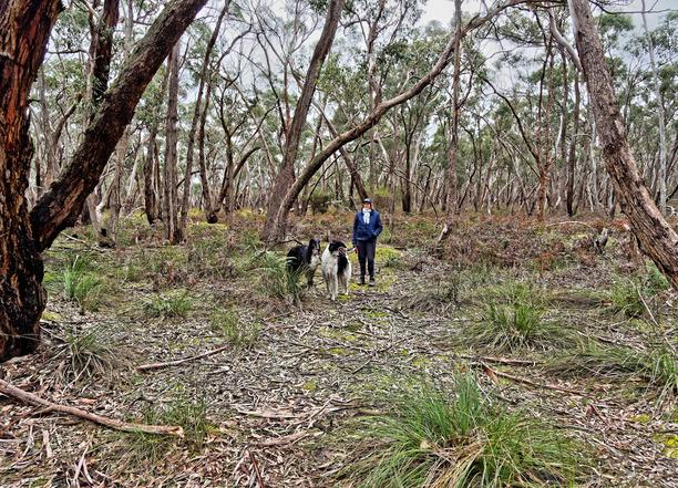 Dereel-bushland-reserve-12.jpeg