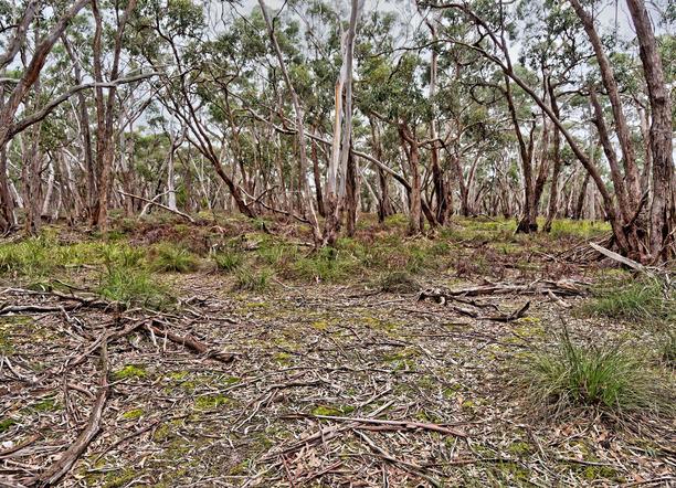 Dereel-bushland-reserve-4.jpeg
