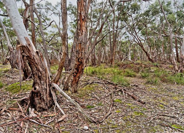 Dereel-bushland-reserve-5.jpeg
